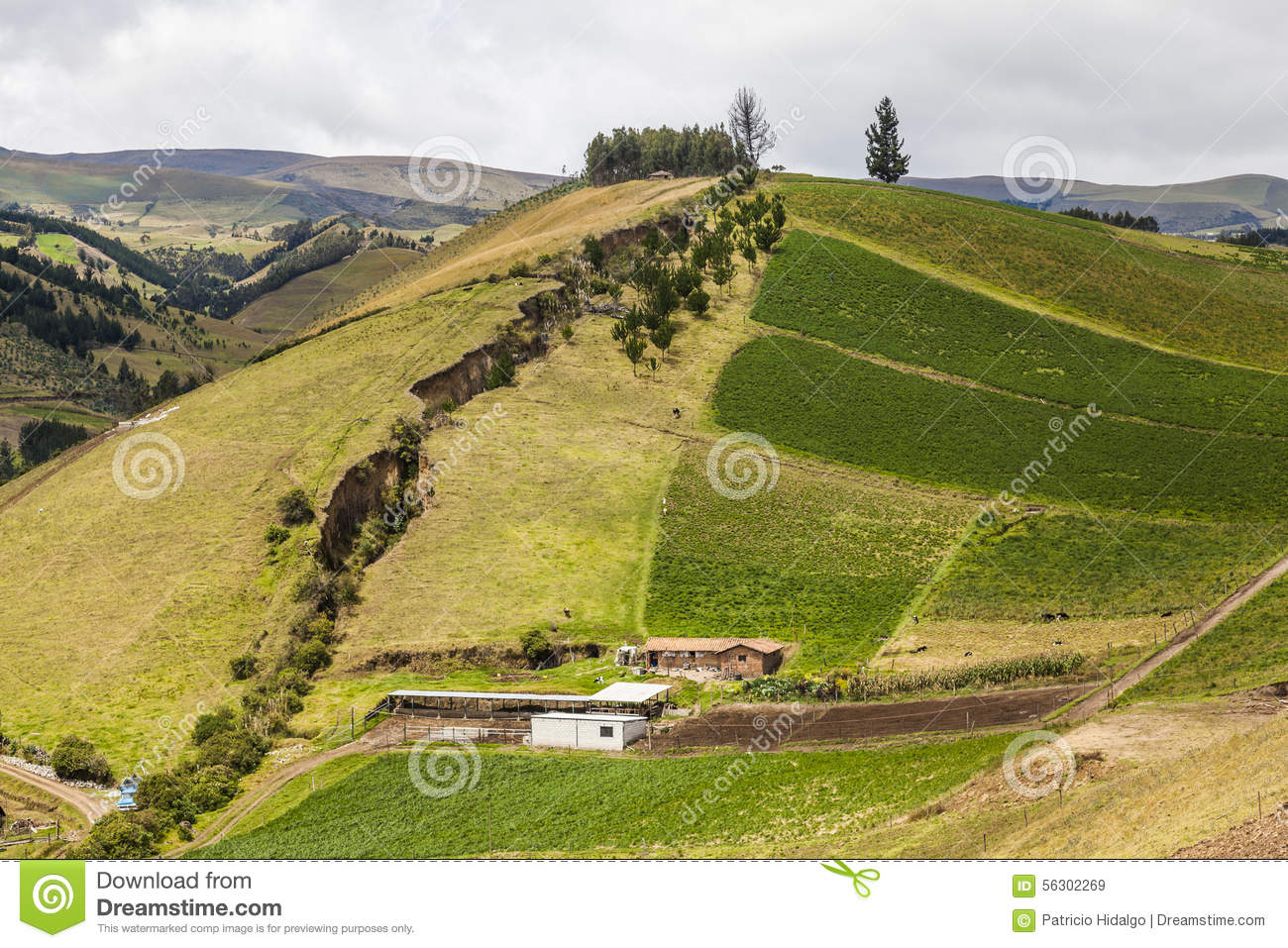 Cultivated fields on slopes