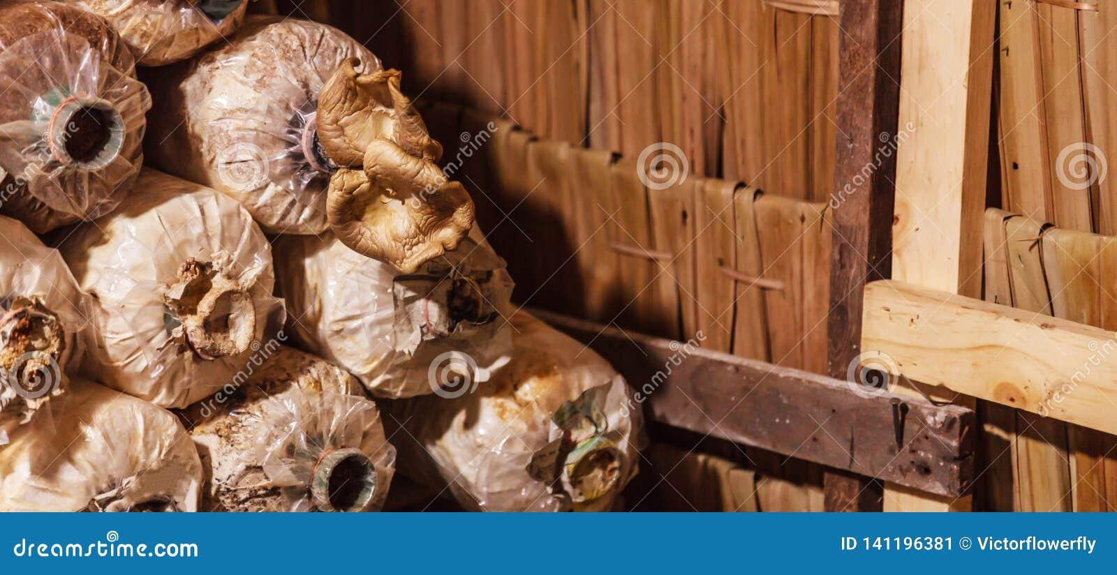 Cultivation And Harvesting Mushrooms In Mushroom Food
