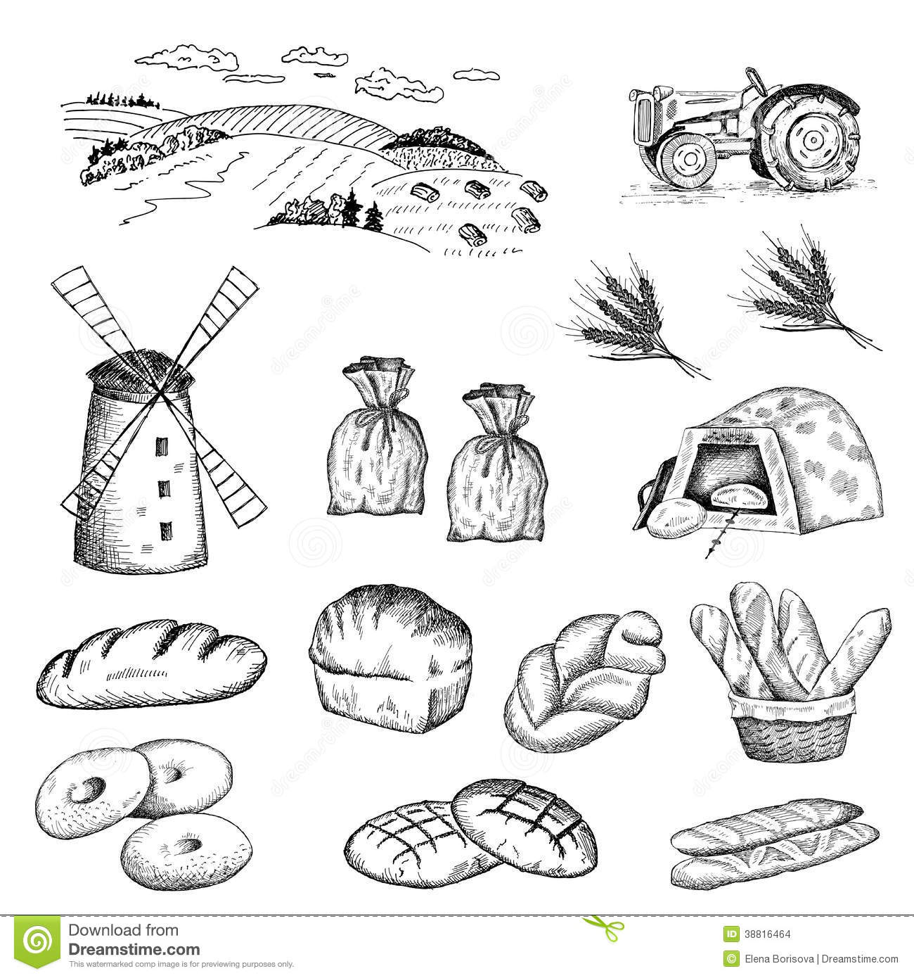 Cultivation of wheat and bread baking