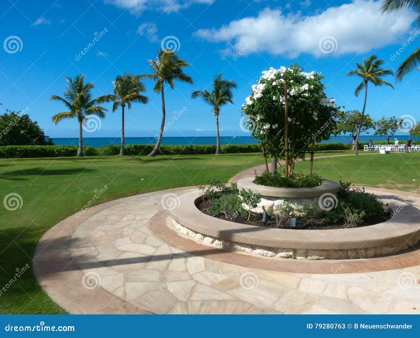 Cultive un huerto con las palmeras que pasan por alto el mar en Hawaii
