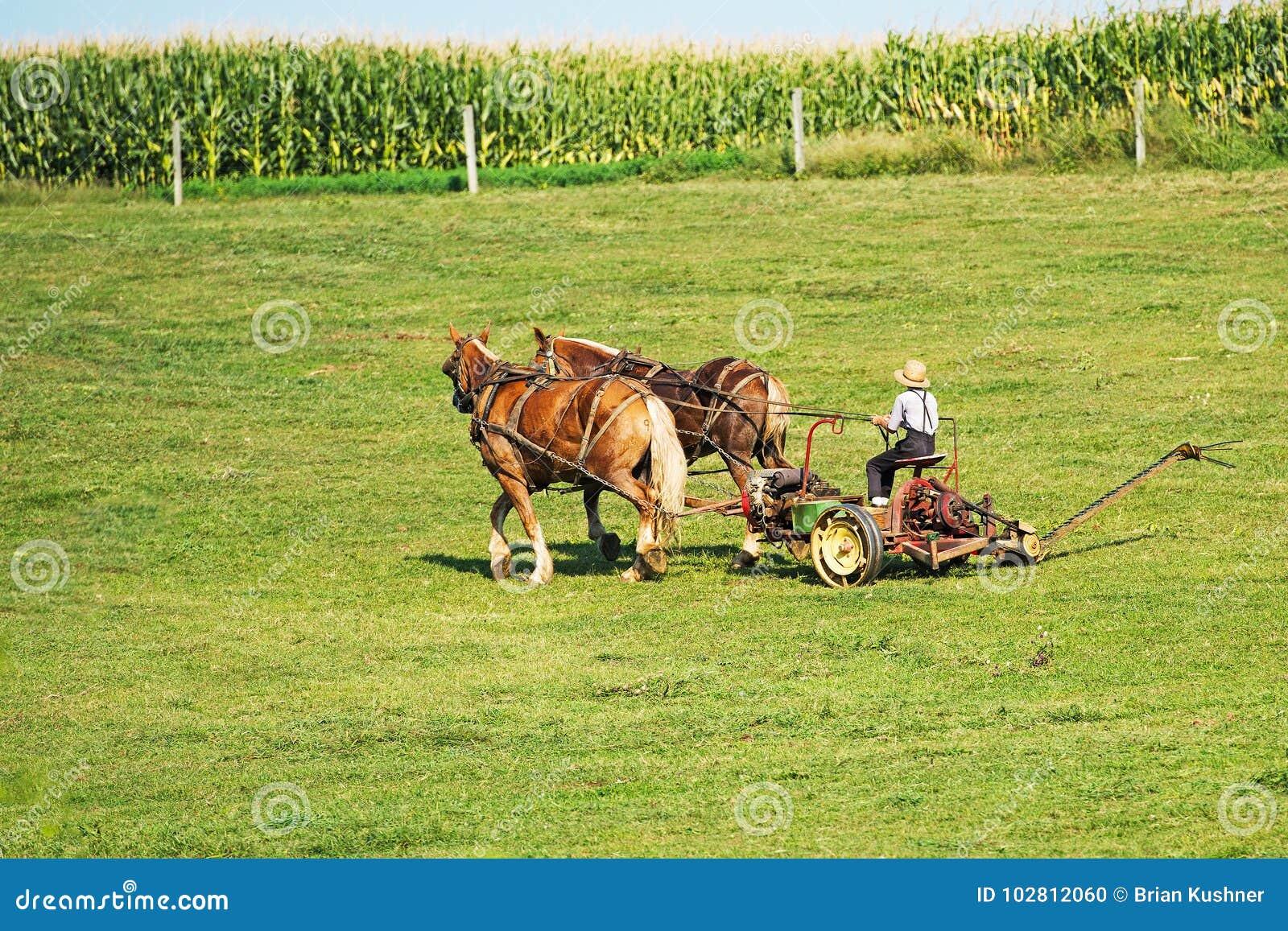 Cultivo de Amish