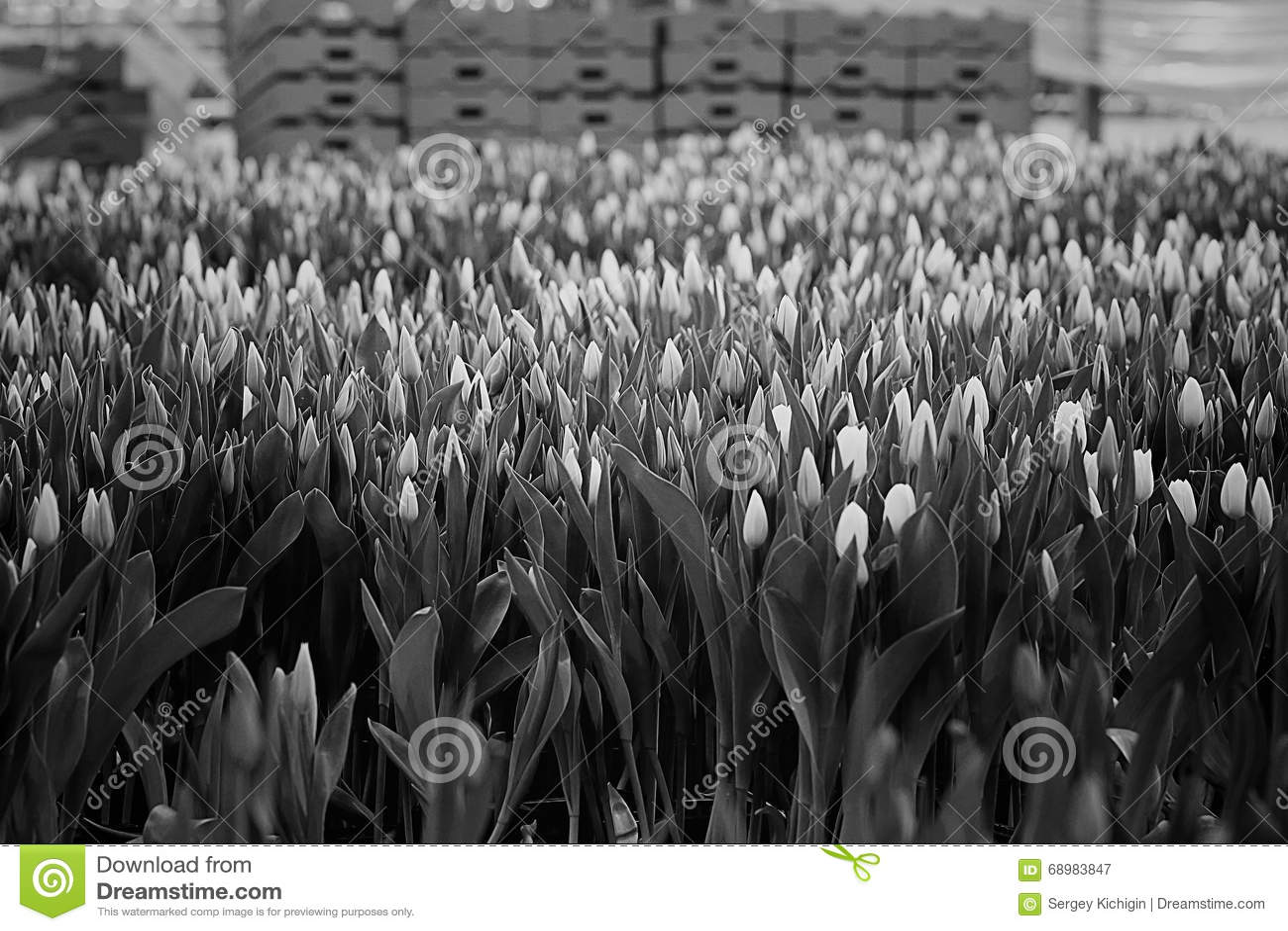 Cultivo de la flor