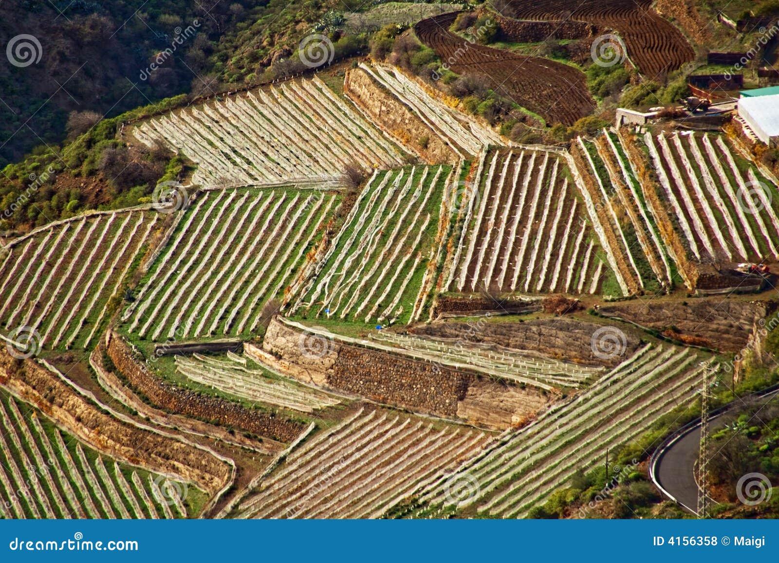 Cultivo De La Terraza Foto De Archivo Imagen De Agrícola