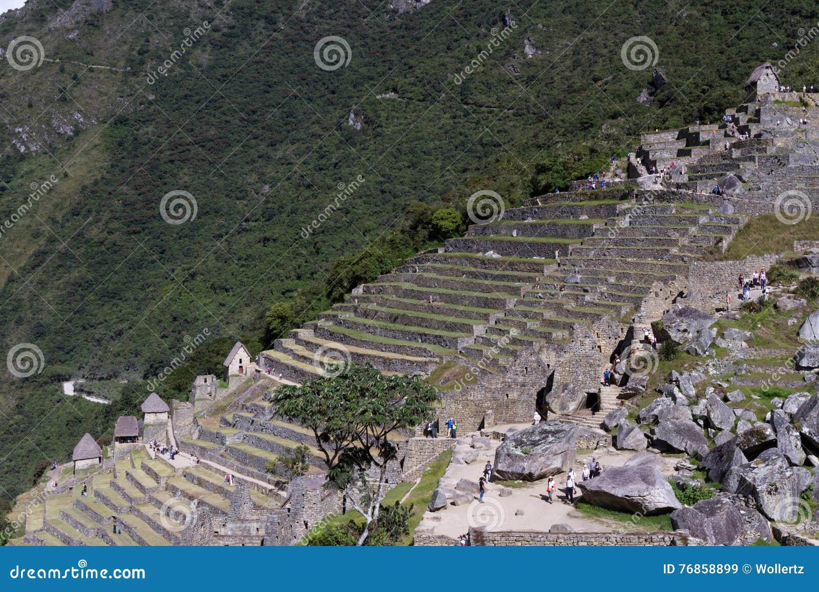 Cultivo De Terrazas En Machu Pichu Imagen De Archivo