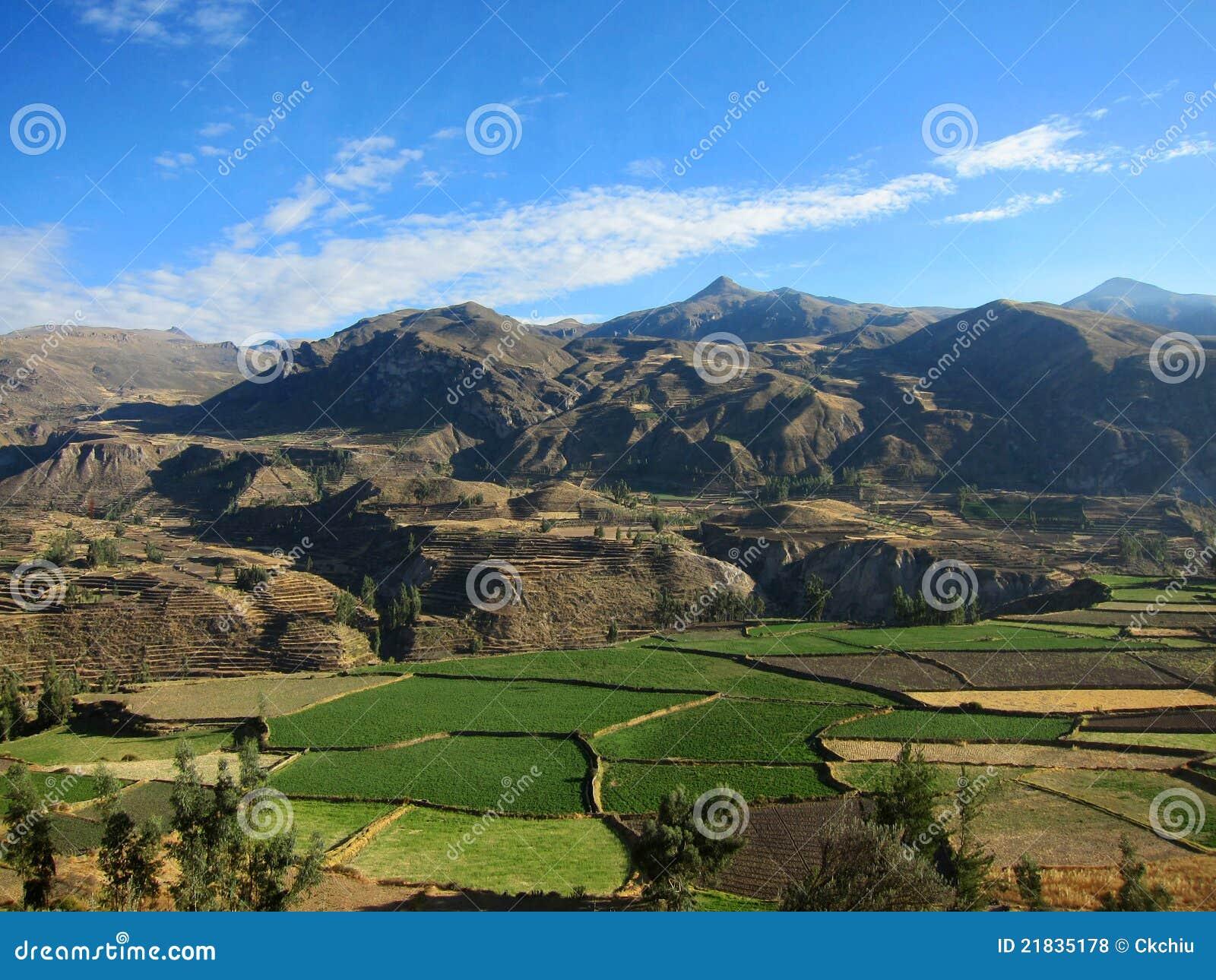 Cultivo De Terrazas En Perú Foto De Archivo Imagen De Lush