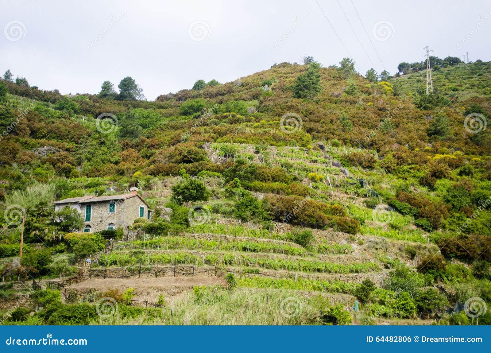 Cultivo Italiano De La Terraza Foto De Archivo Imagen De