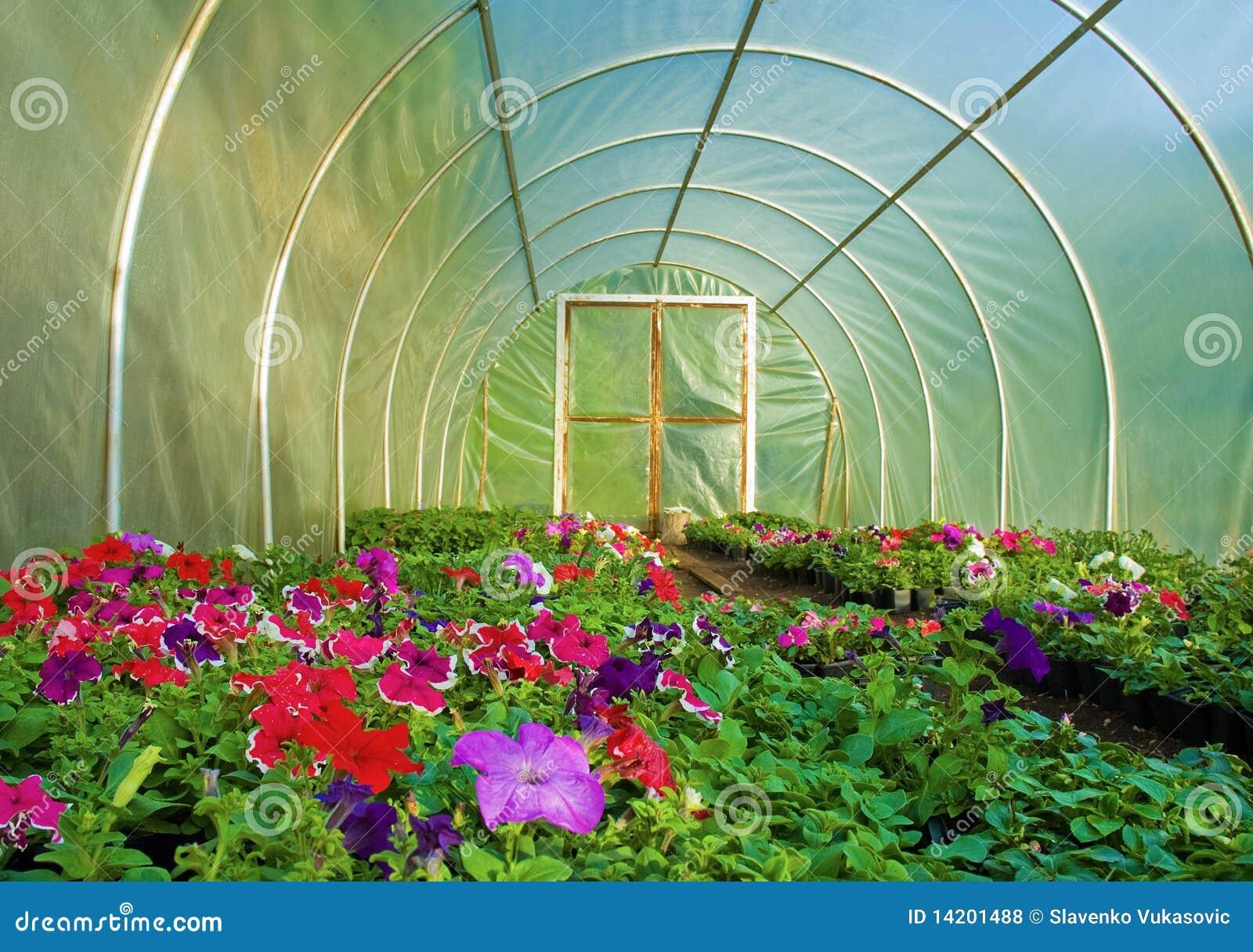 culture de fleur en serre chaude photo stock image du potted couleur 14201488. Black Bedroom Furniture Sets. Home Design Ideas