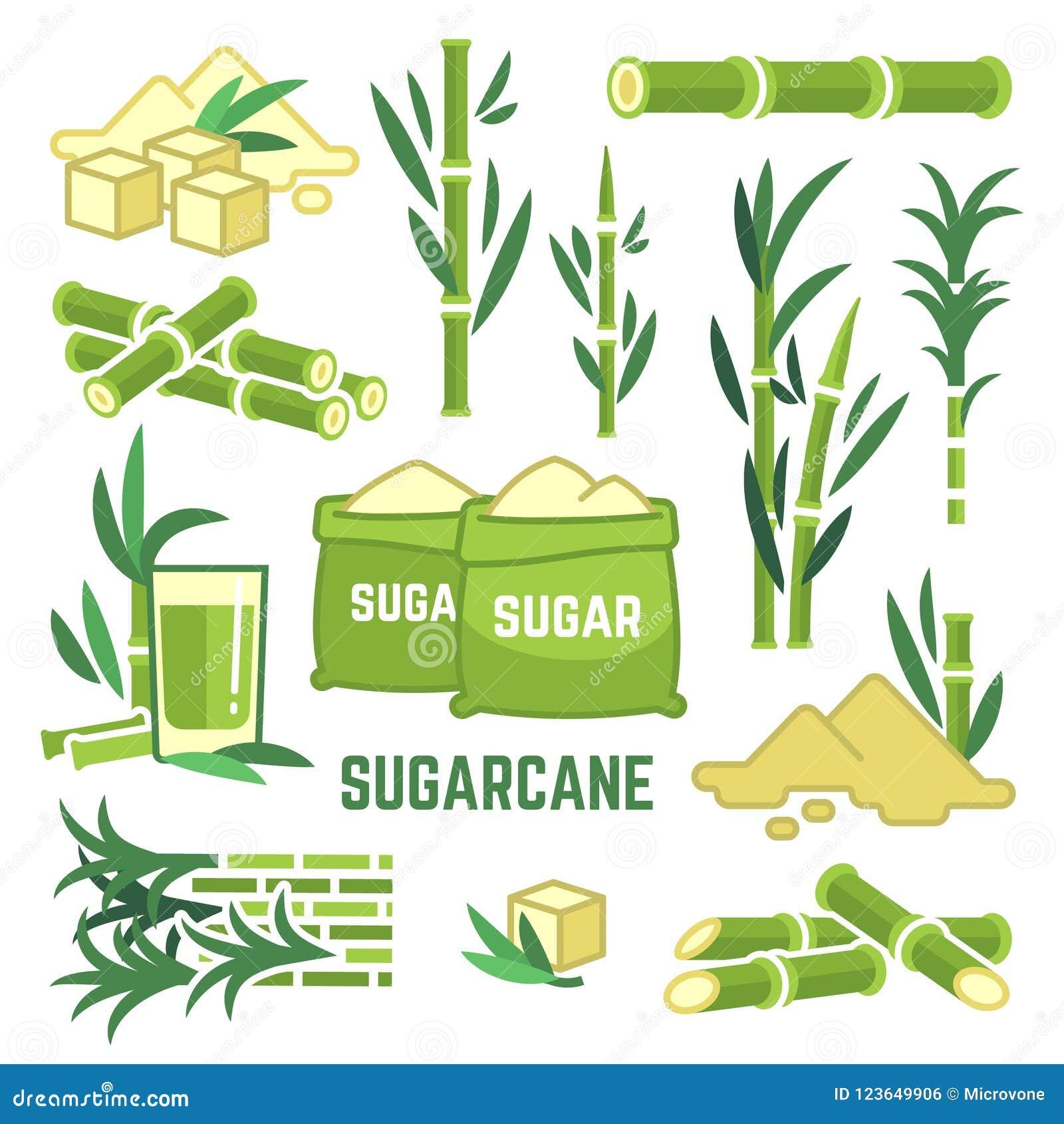 Cultures agricoles de sucrerie, feuille de canne, icônes de vecteur de jus de canne à sucre
