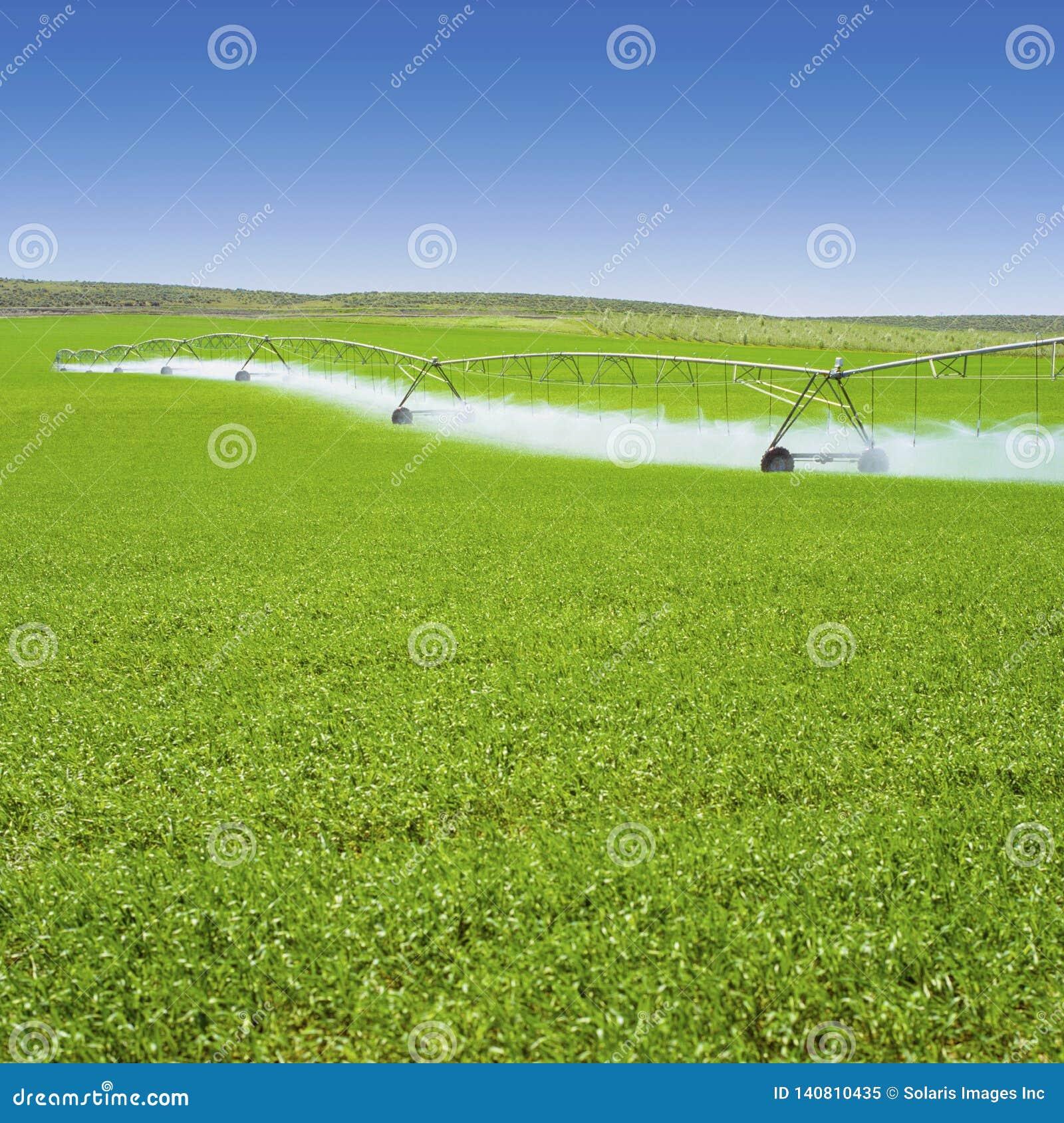 Cultures de ressort d arrosage d équipement d irrigation dans le domaine vert de ferme Industrie agricole d agriculture