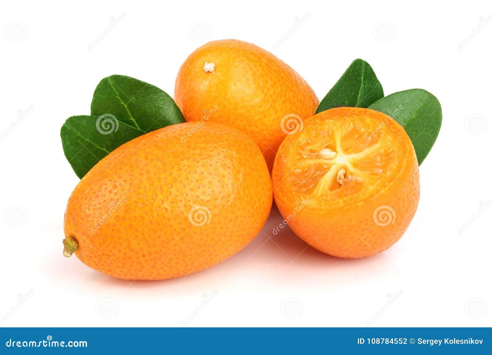 Cumquat ou kumquat com a folha isolada no fim branco do fundo acima