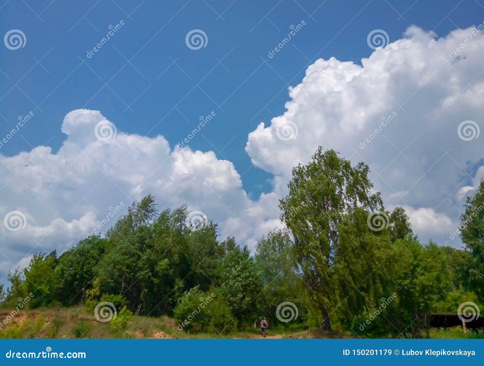 Cumulus en ciel au-dessus de la forêt