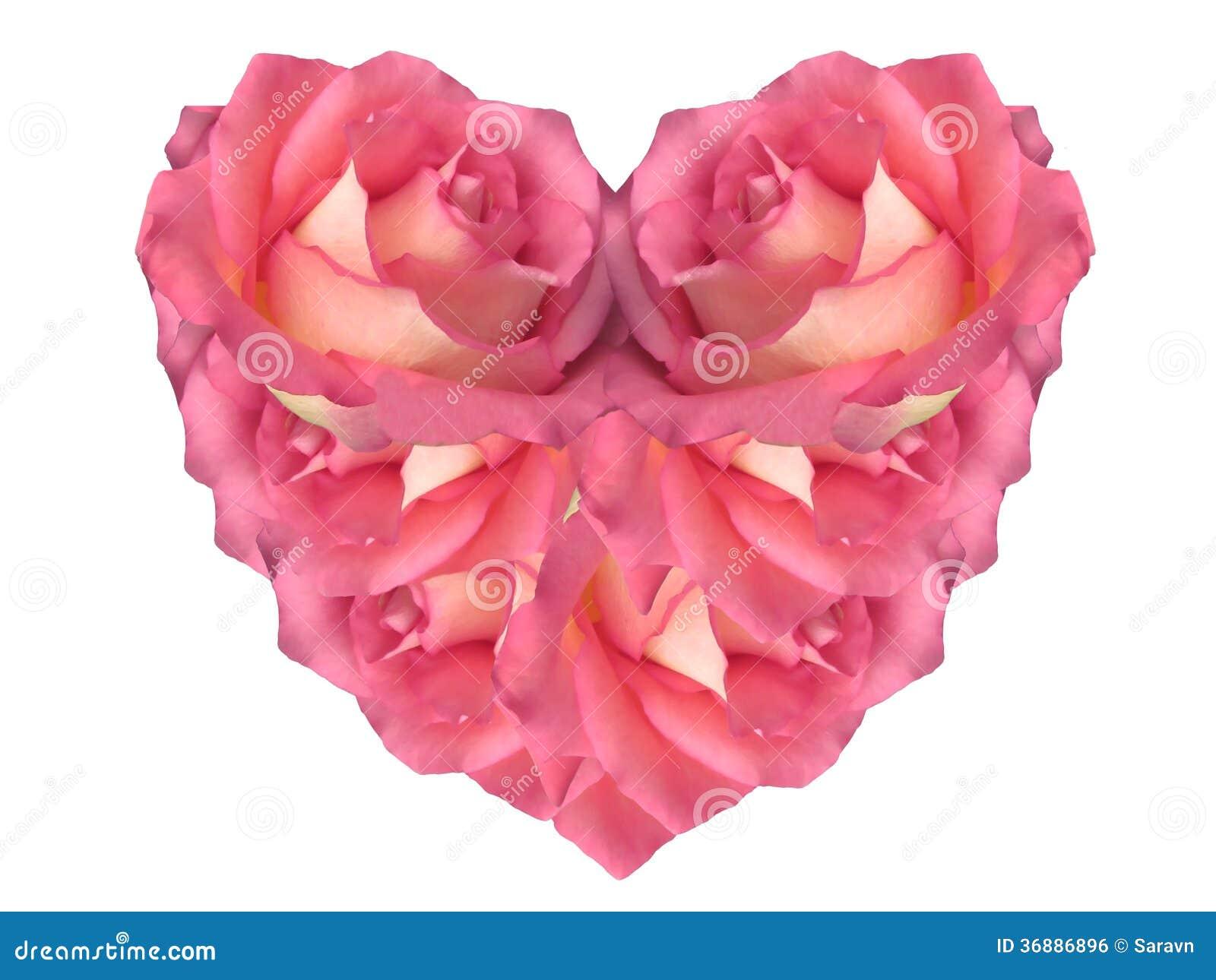 Download Cuore Rosa Fatto Delle Rose Fotografia Stock - Immagine di romantico, bianco: 36886896