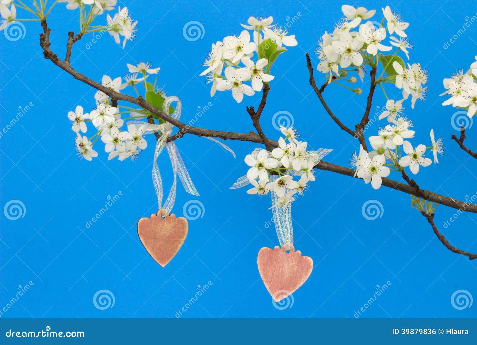 cuori di legno con fioru : Cuori di legno rosa che pendono dal ramo di pero con i fiori contro il ...