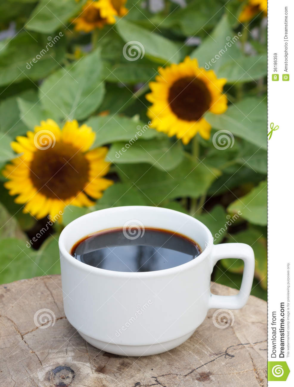 Cup Of Coffee On Sunflowers Background Royalty Free Stock