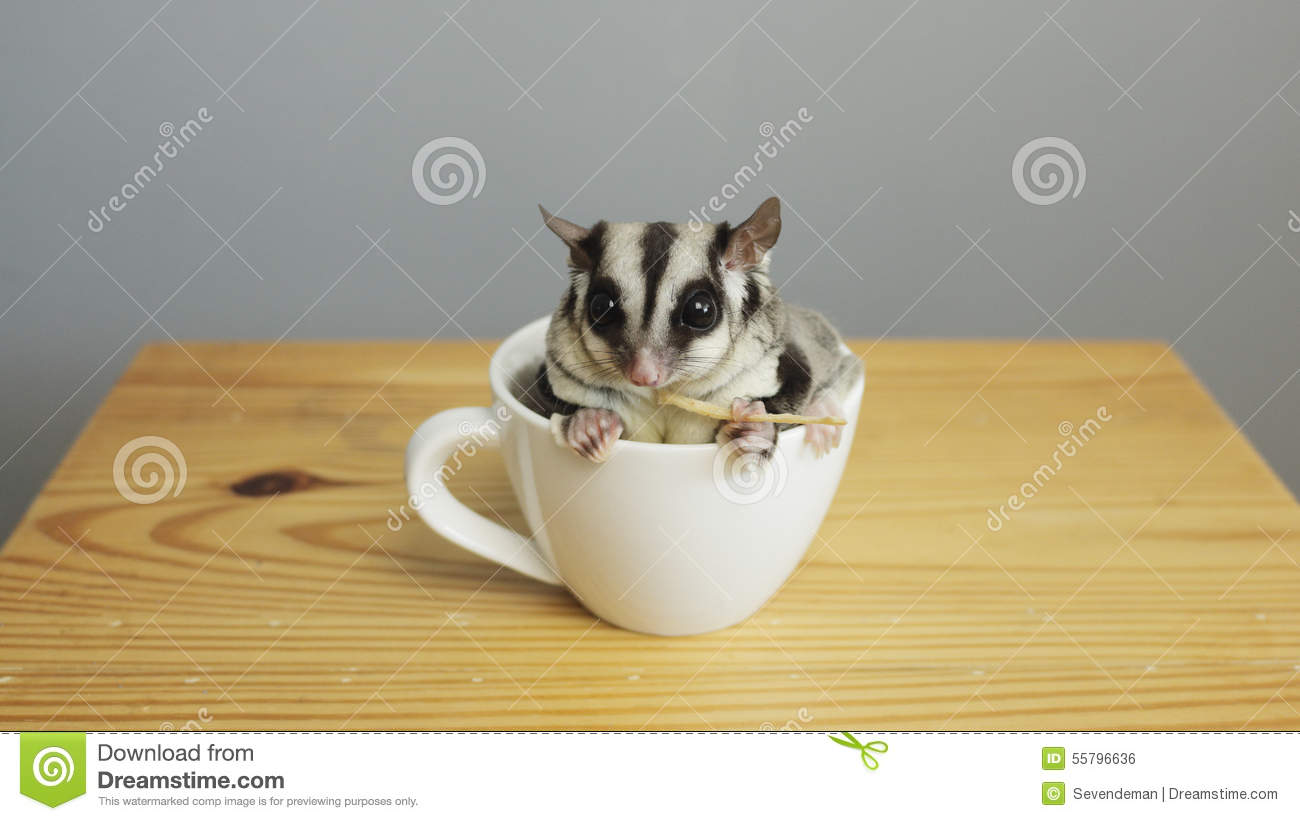 A cup of sugarglider.