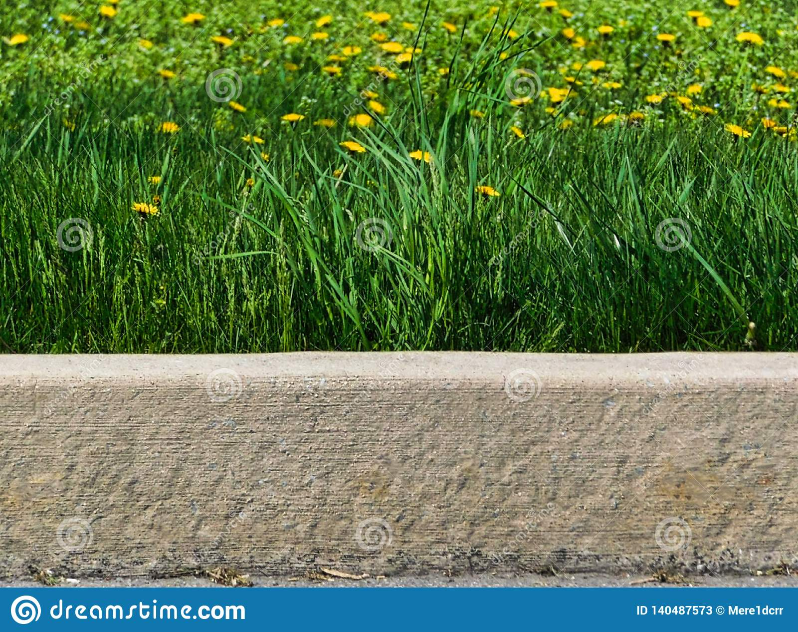 Tall grass and dandelions along the curb