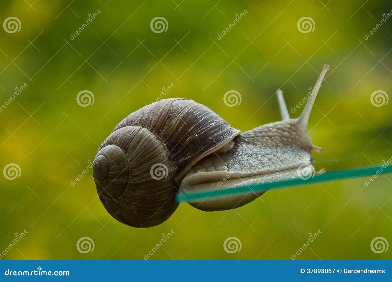 Curieusement escargot
