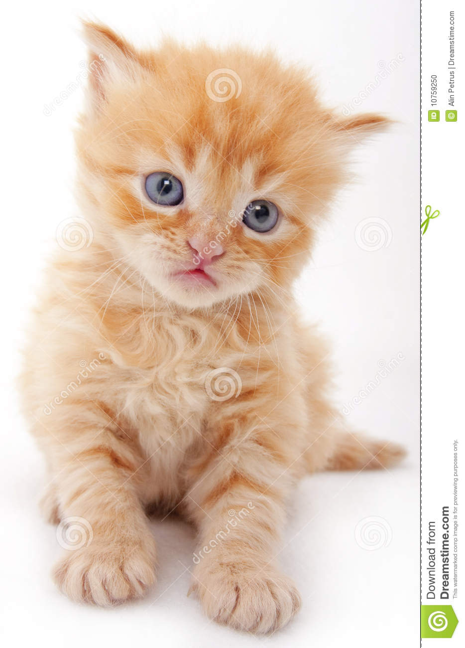 Curious Baby Cat Stock Image