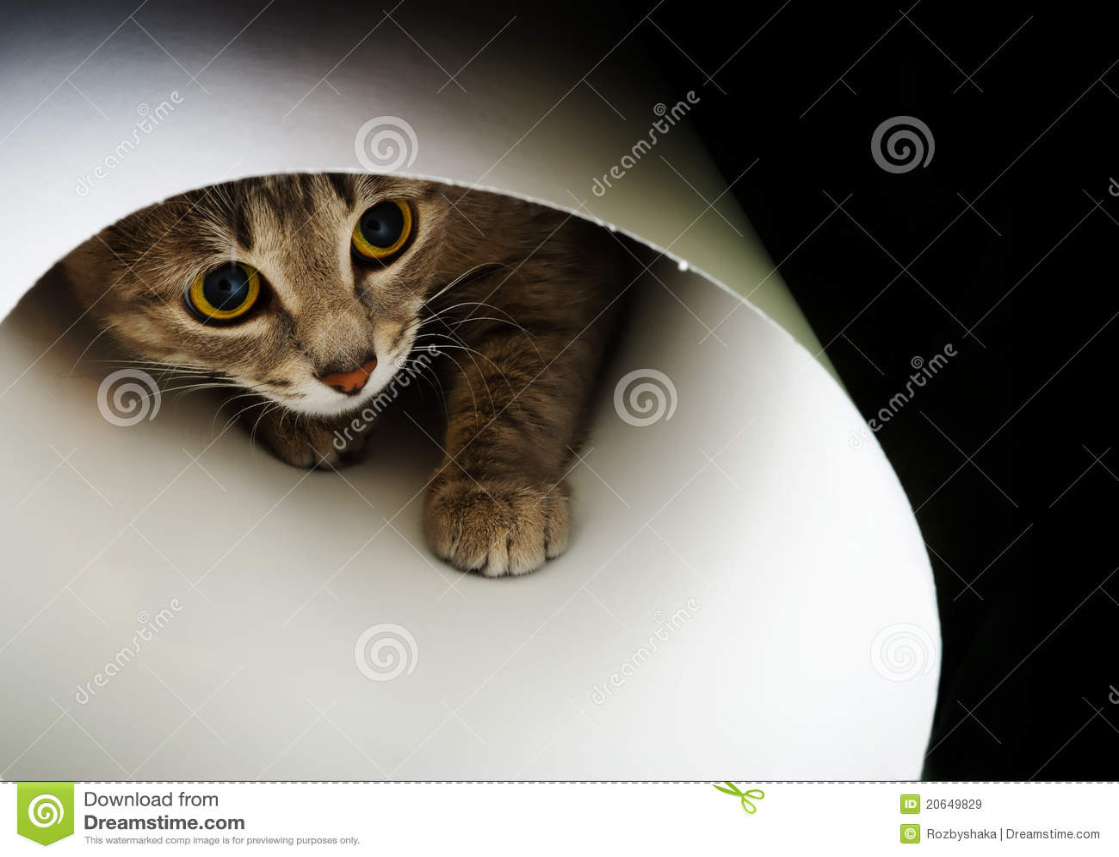 Beautiful cat c... Curious Cat Clipart