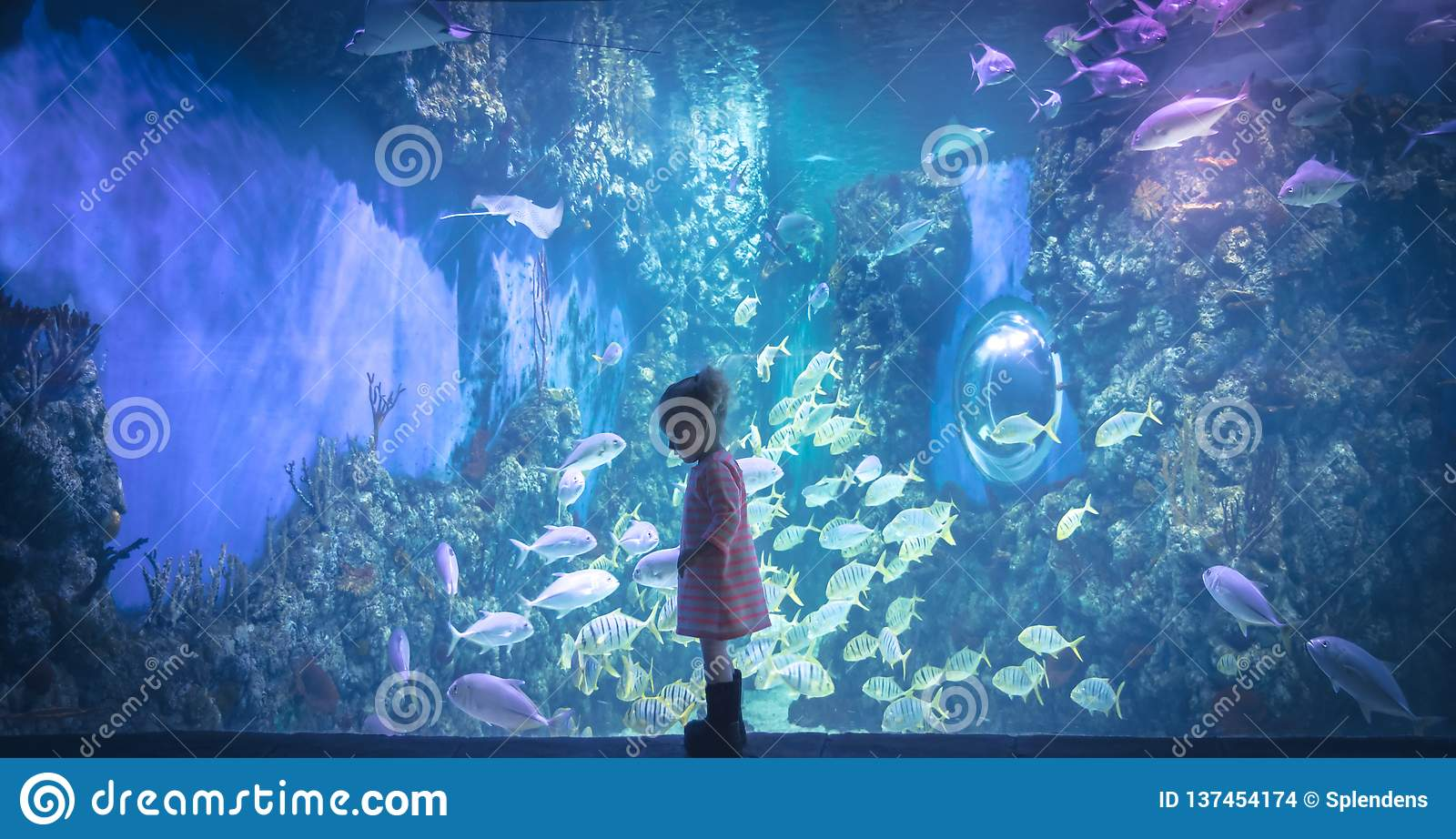 Curious child looking underwater reef landscape in marine aquarium in deep blue purple pink colors concept children curiosity and