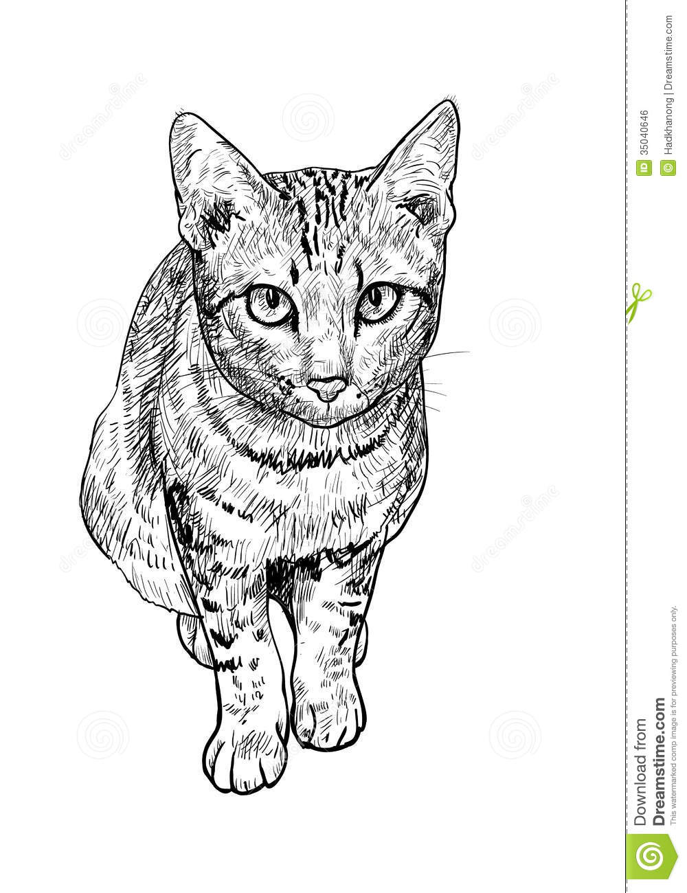 Curious Cute Cat Royalty Free Stock Image Image 35040646