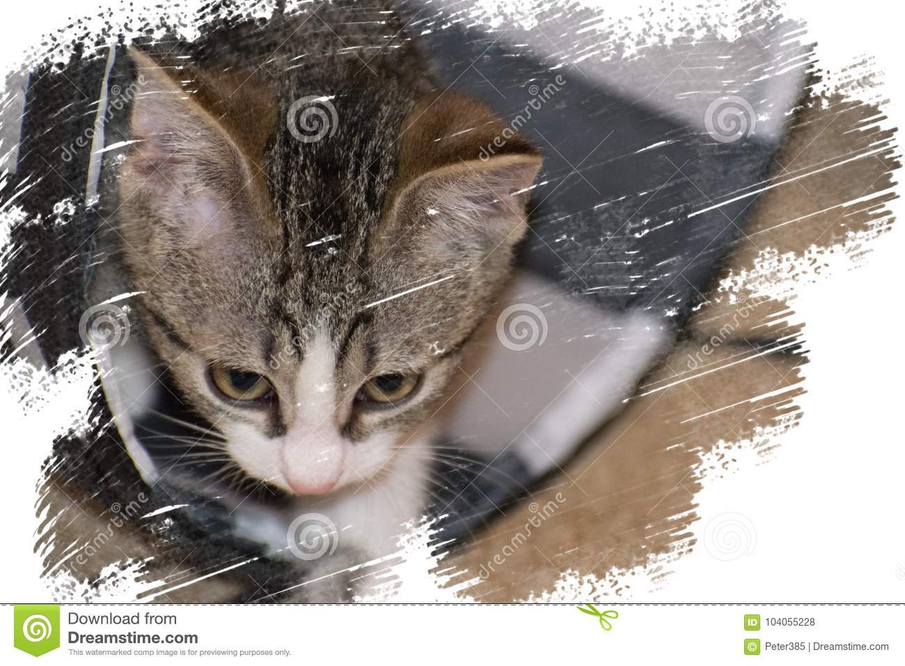 Download Curious cute cat in tunnel stock photo. Image of domesticated - 104055228