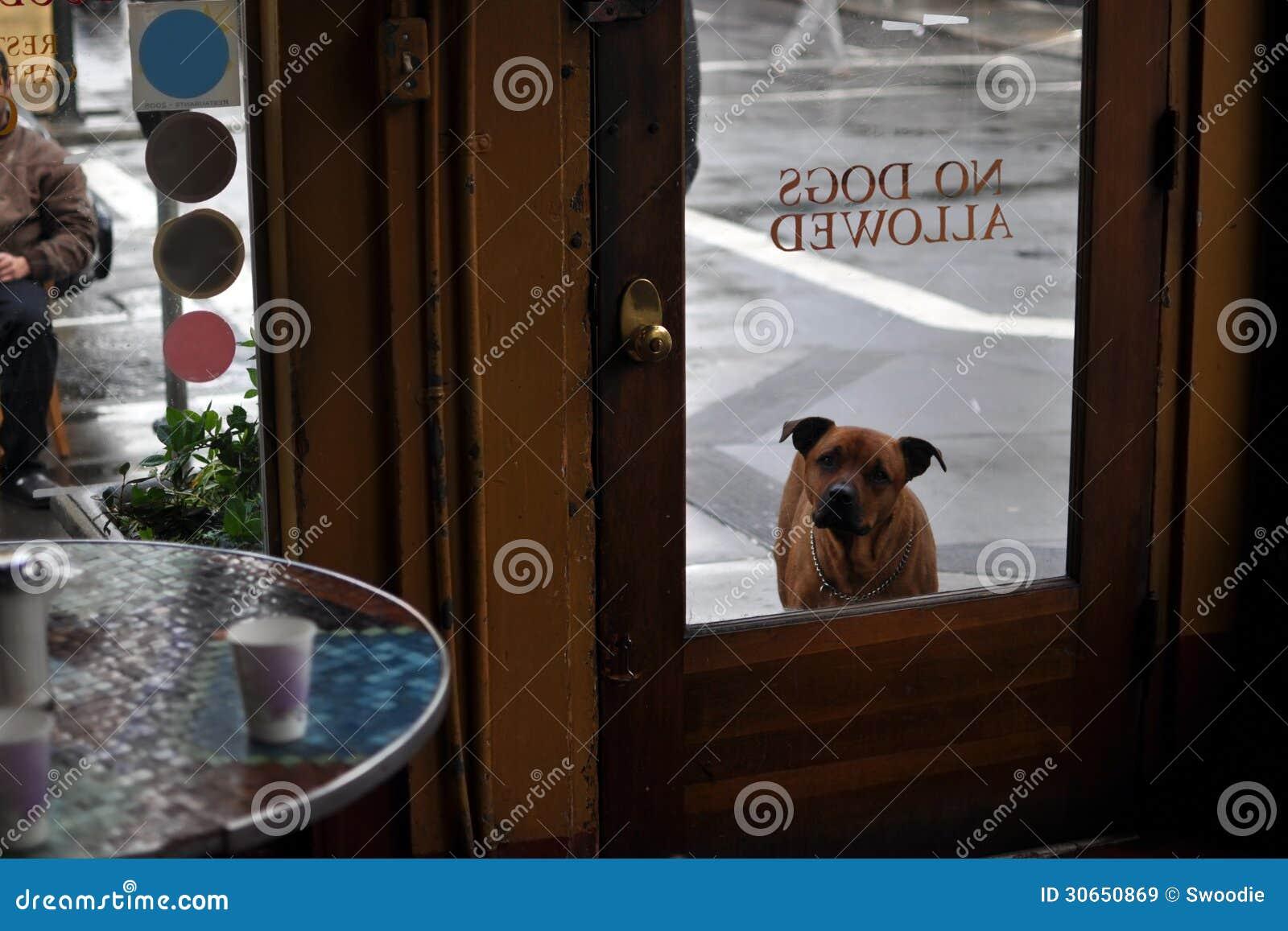 Curious dog waits outside cafe