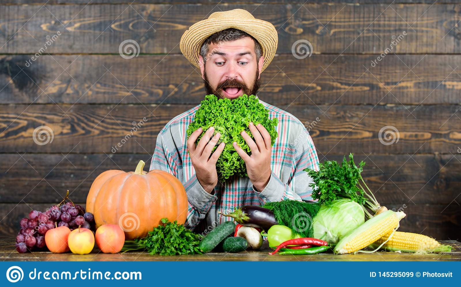 Curious farmer. bearded mature farmer. harvest festival. man chef with rich autumn crop. organic and natural food. happy