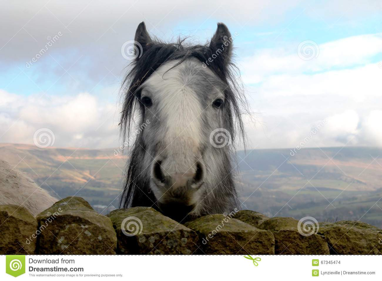Curious horse in open fields looking directly at the camera.