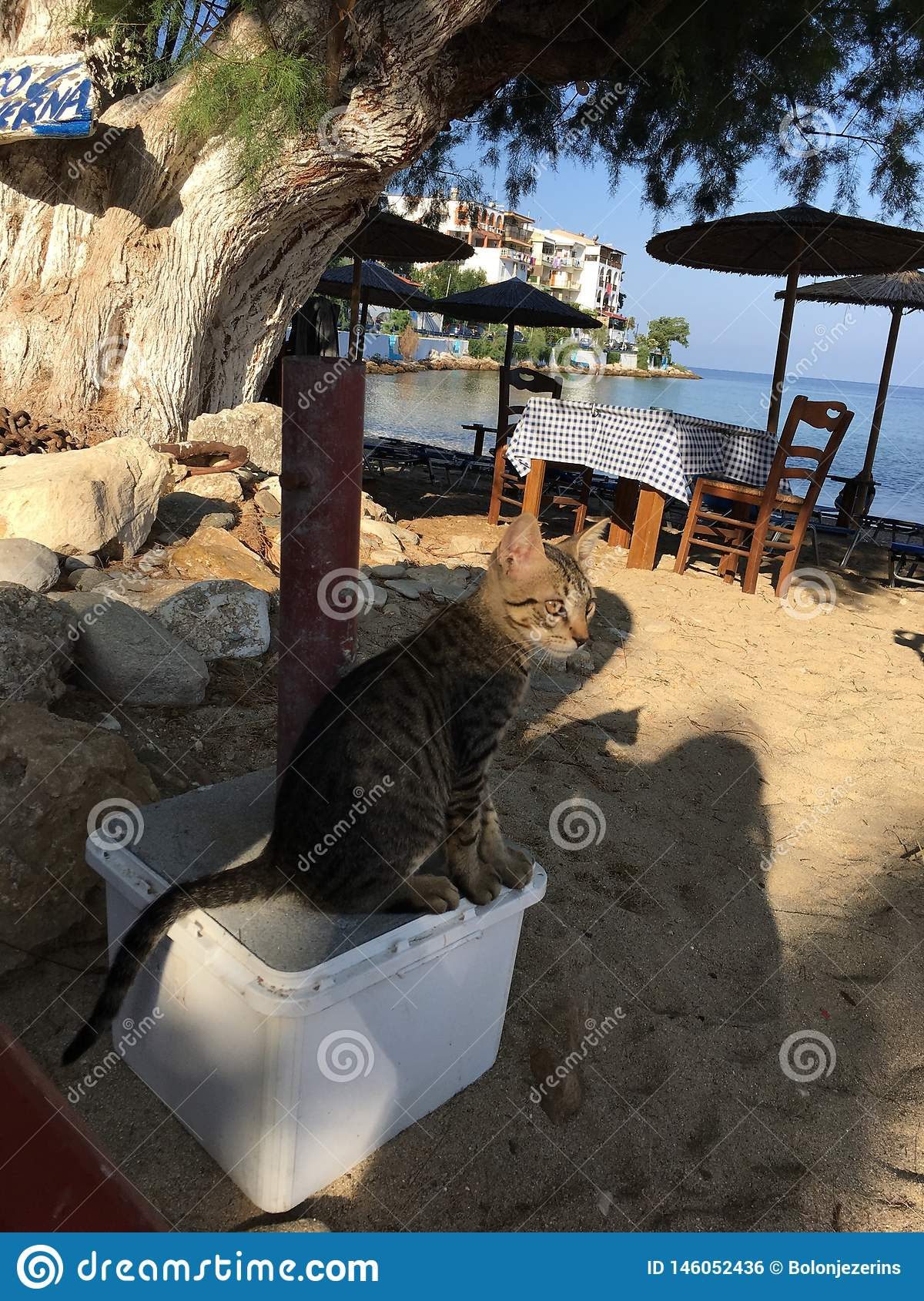 A curious look at the cat on the seashore