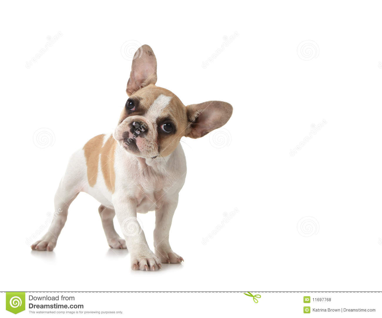 Curious puppy dog with copy space royalty free stock photos image