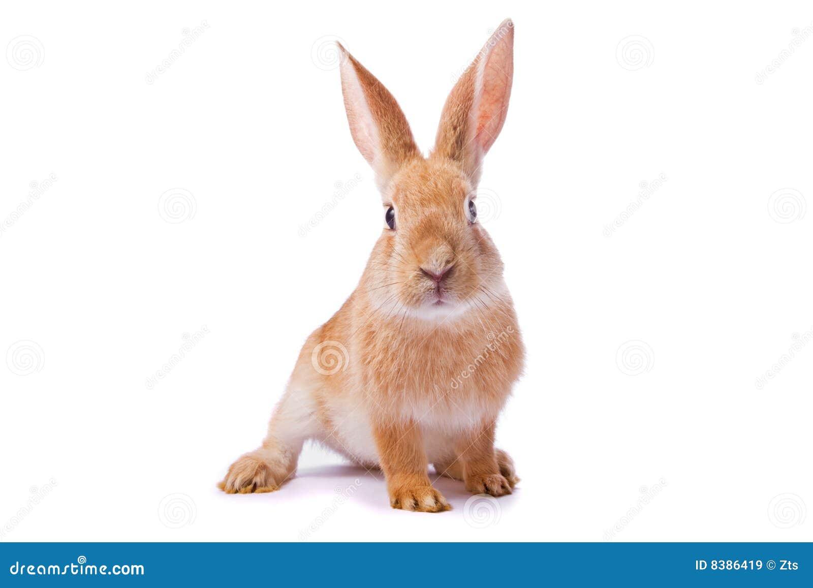 Rosemary rabbit cam
