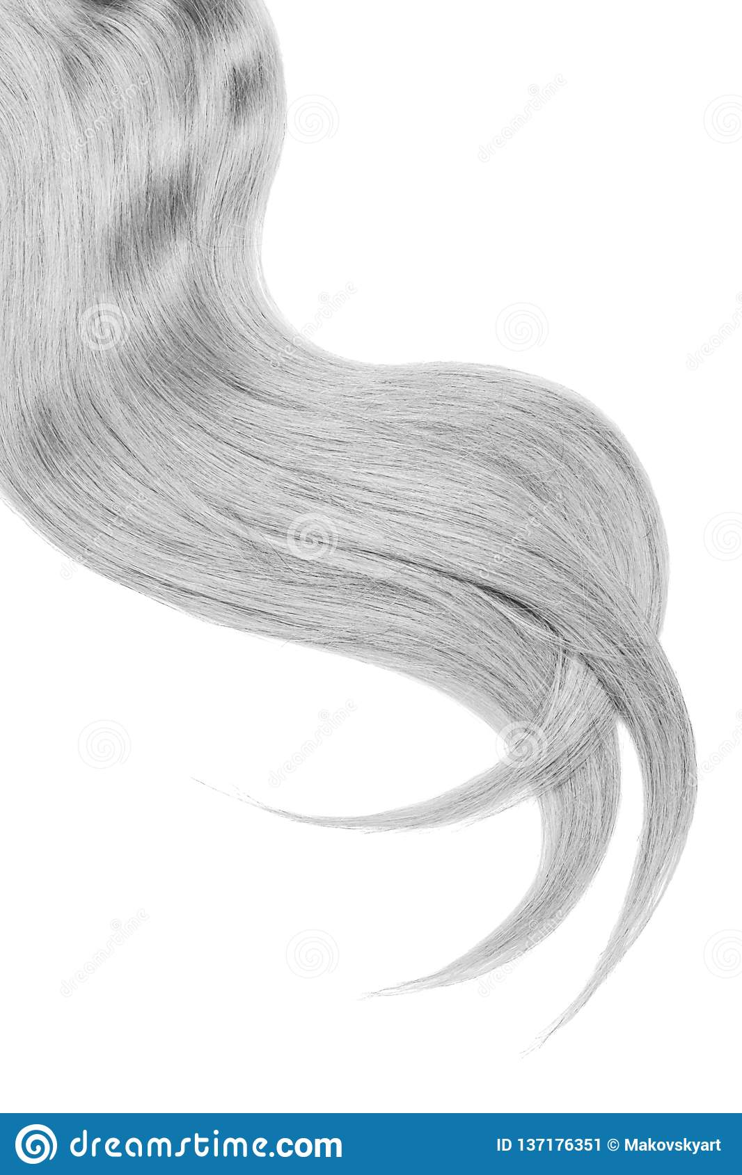 Curl of natural gray hair on white background. Wavy ponytail