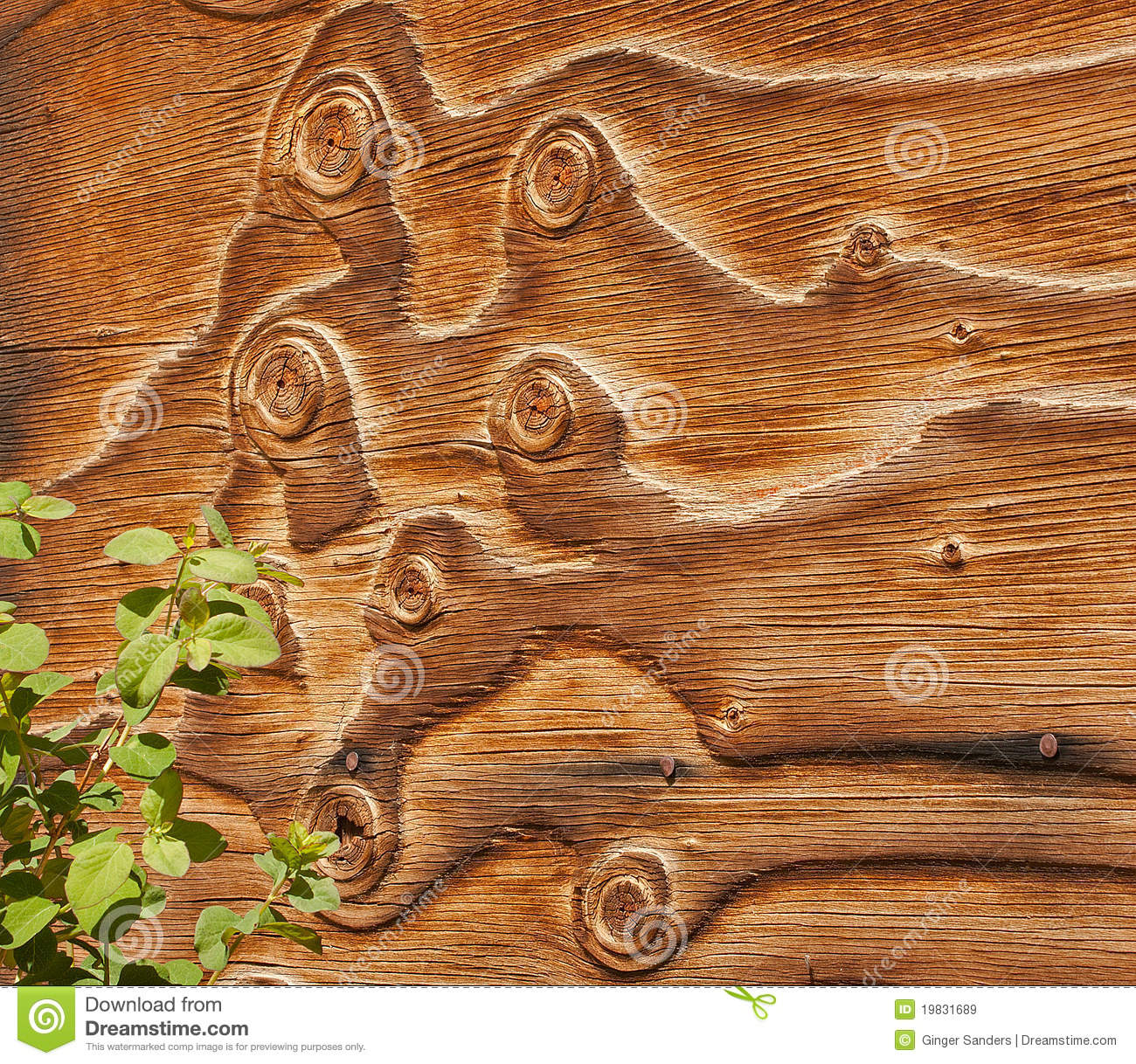 Curly Barn Wood Siding with Plants