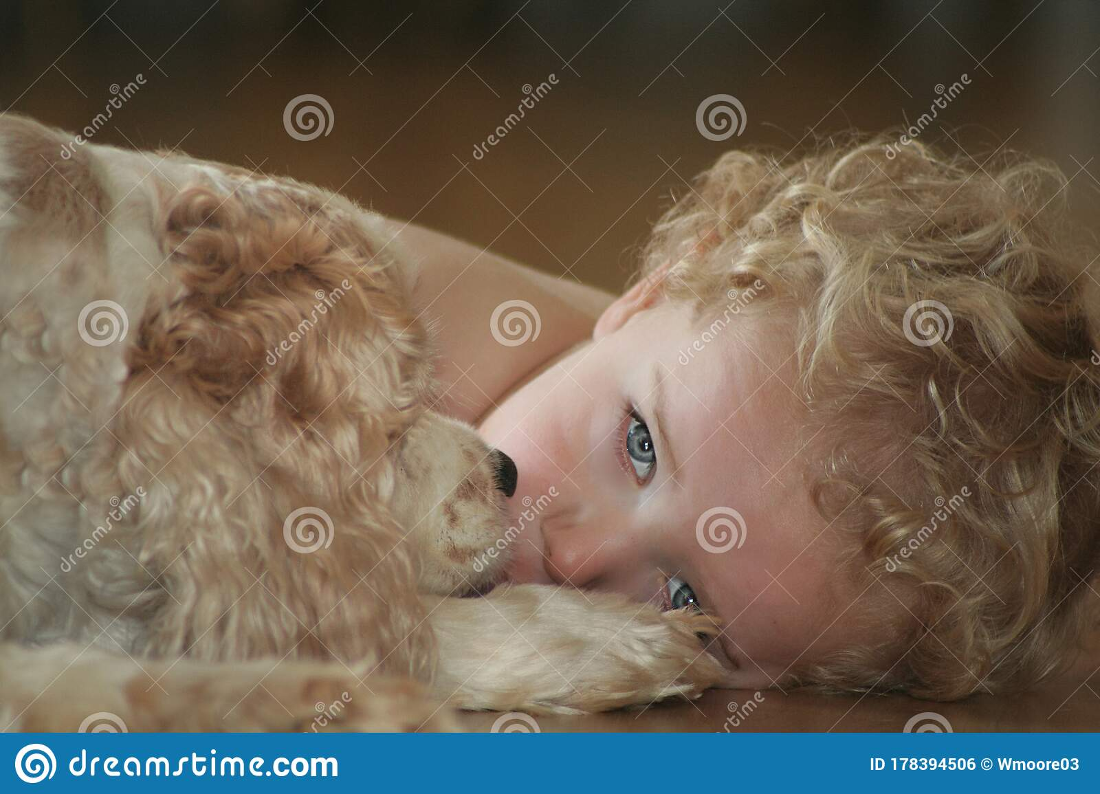 Curly Blonde Headed Blue Eyed Boy Laying With Cocker Spaniel Stock Photo Image Of Brown Spaniel 178394506