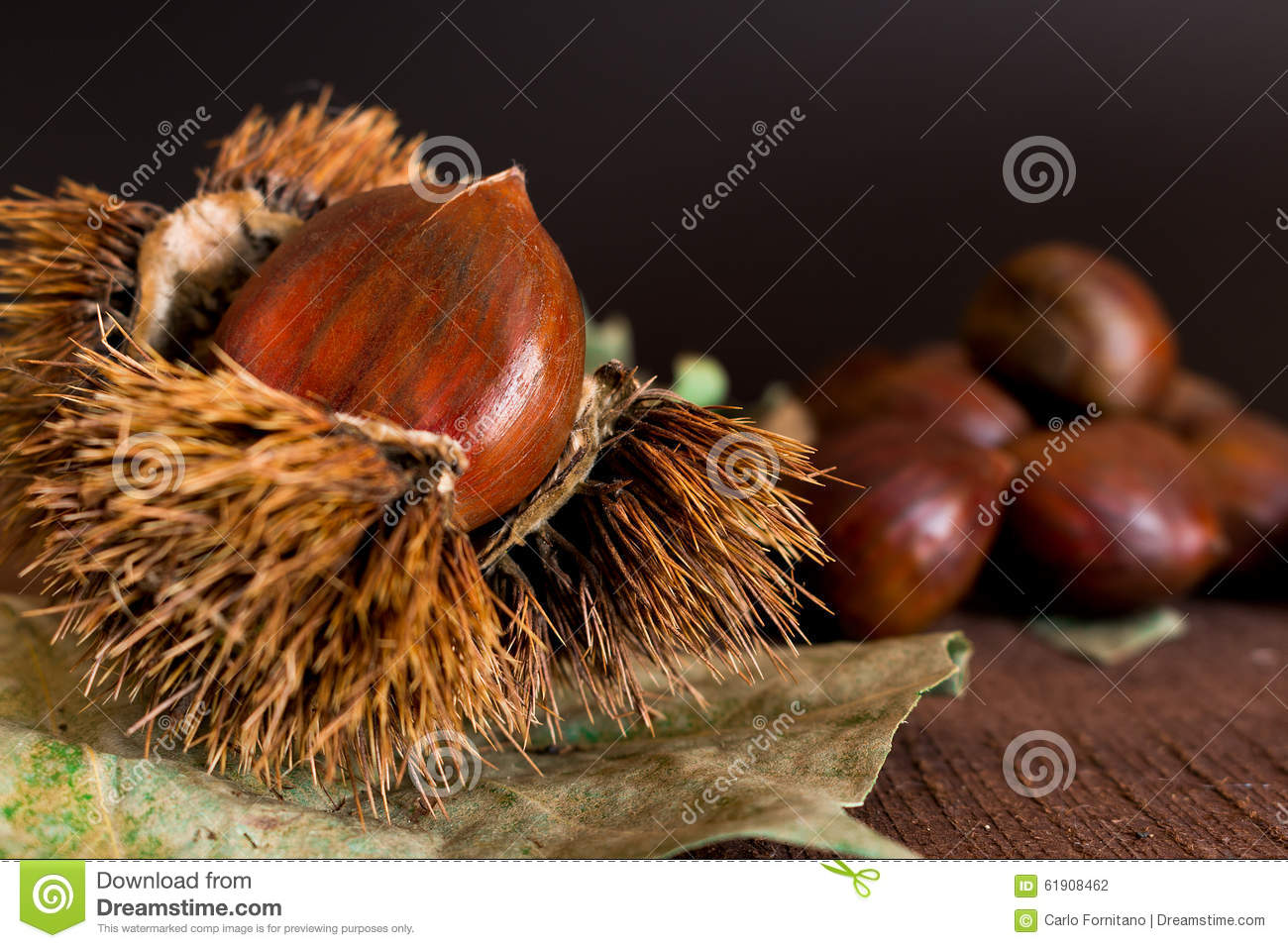 Curly chestnut