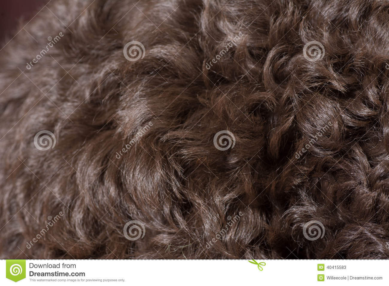 Fine Curly Dog Hair Texture Stock Photo Image 40415583 Hairstyle Inspiration Daily Dogsangcom