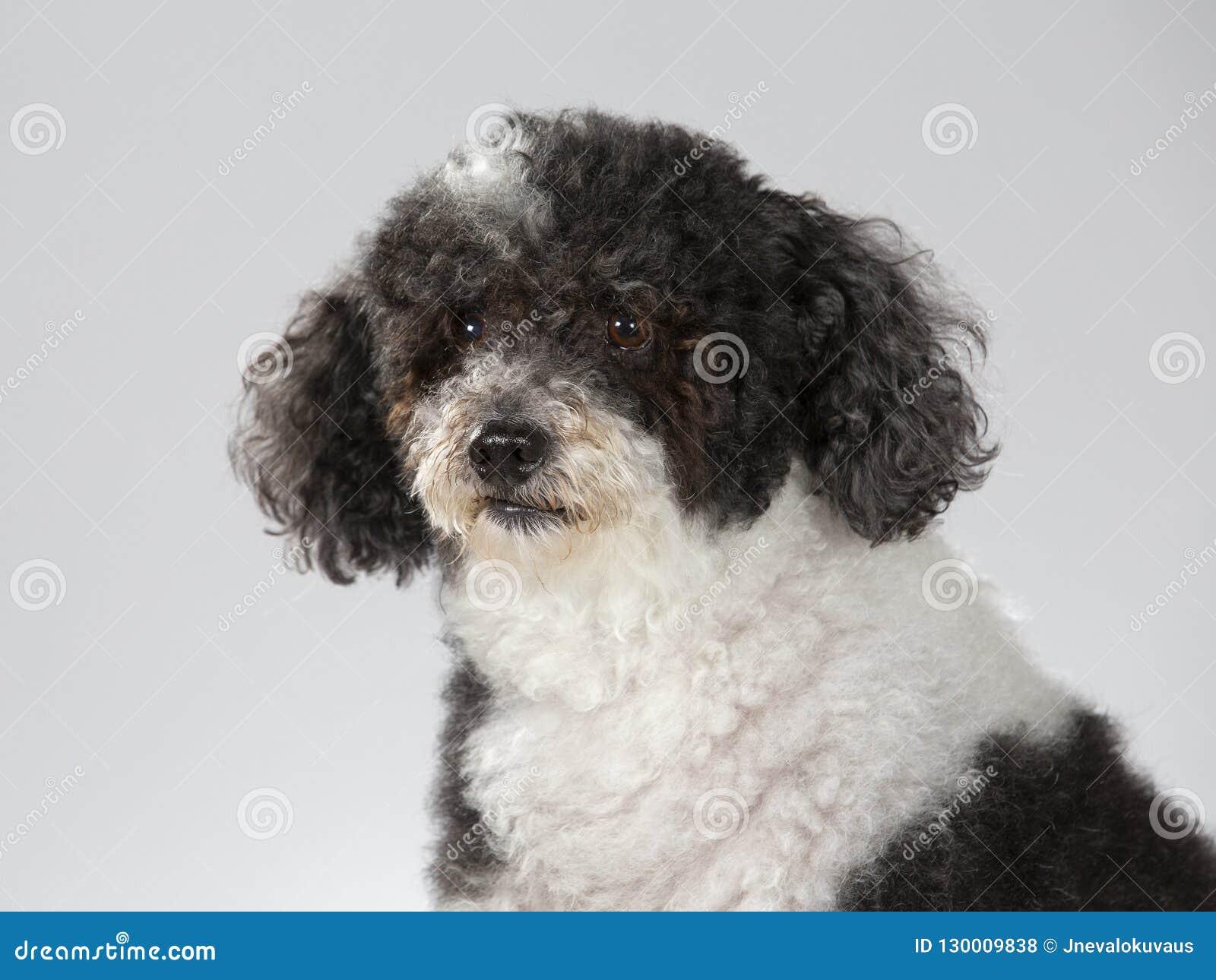 Amateur Doggy Pov Creampie