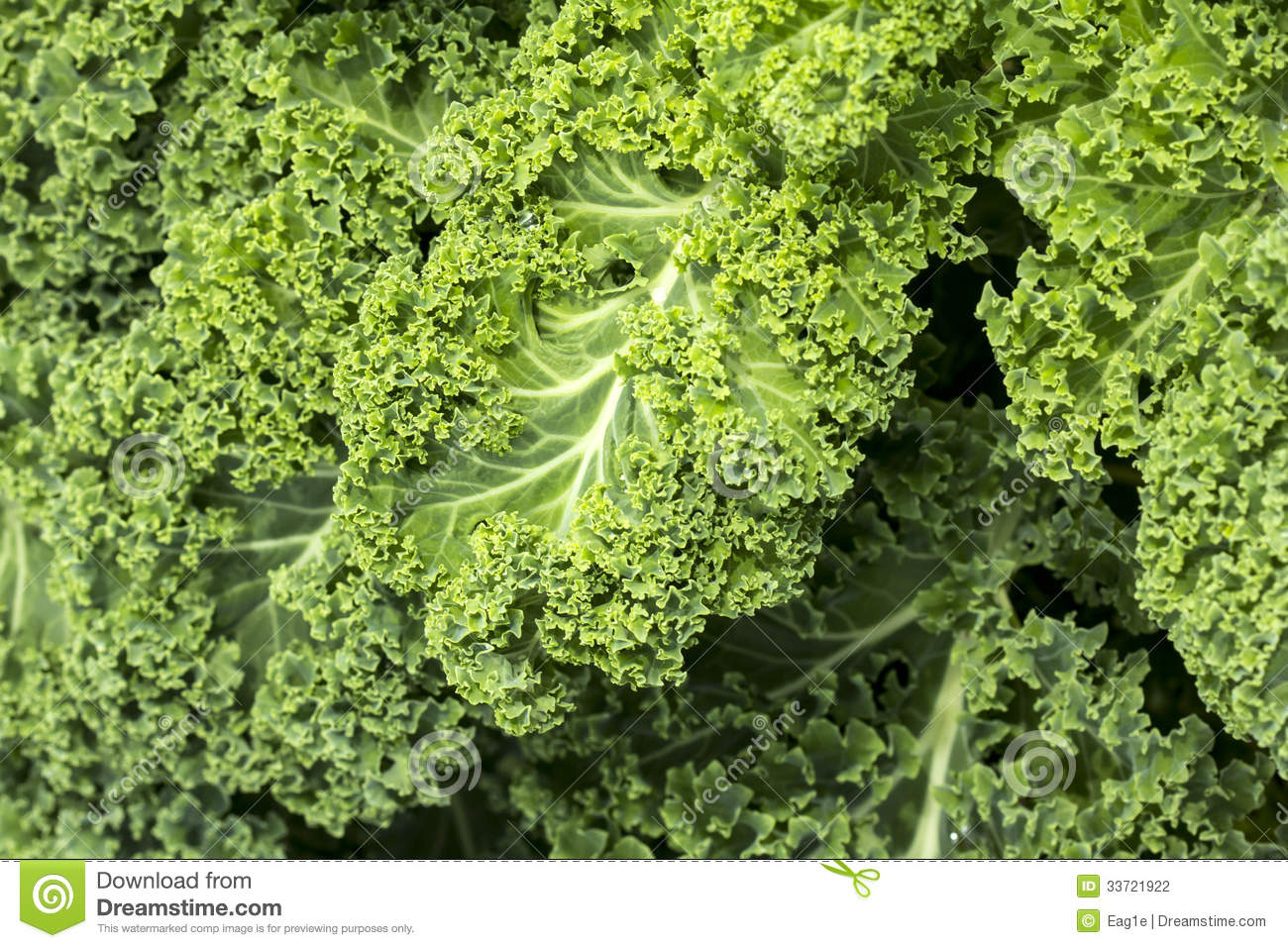 how to cook curly kale