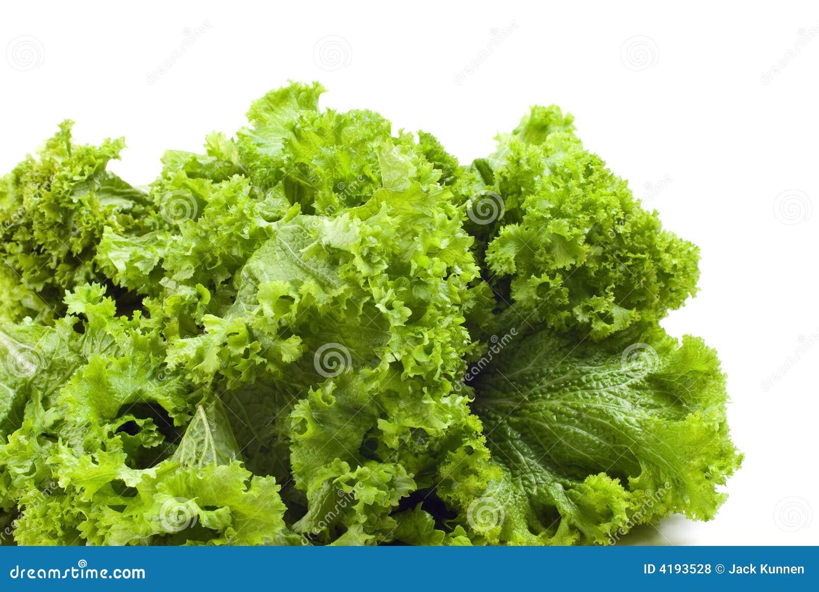 ... mustard greens mustard greens are fast mustard greens curled mustard