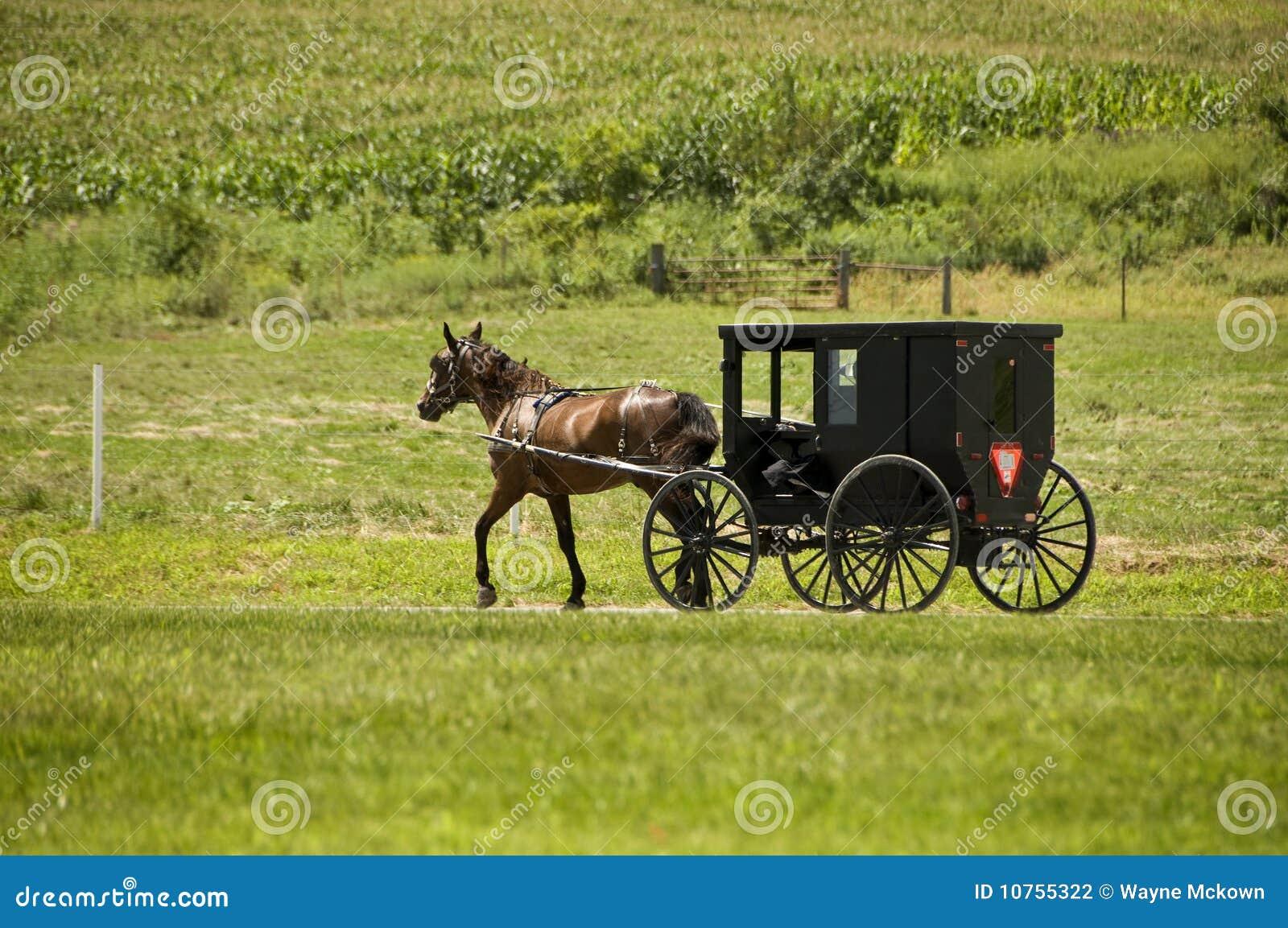 Curso de Amish