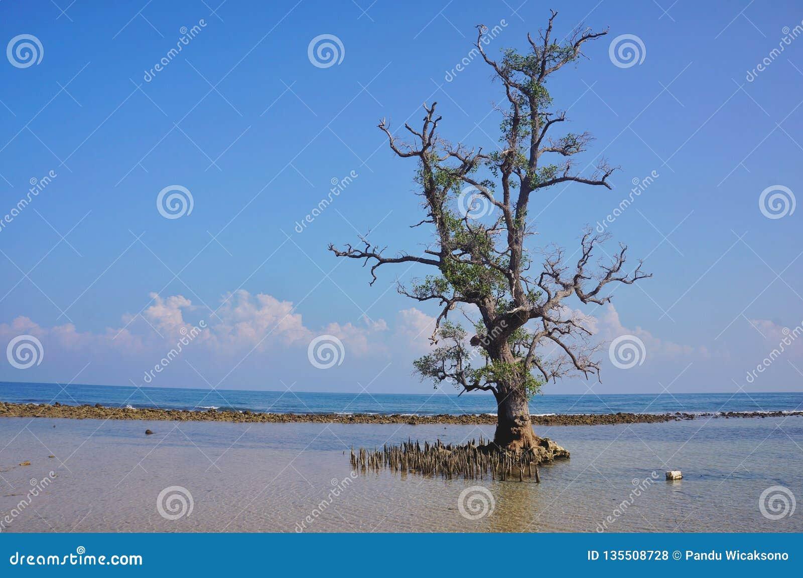 Curso romântico da praia do por do sol para o verão do divertimento das férias da lua de mel no papel de parede
