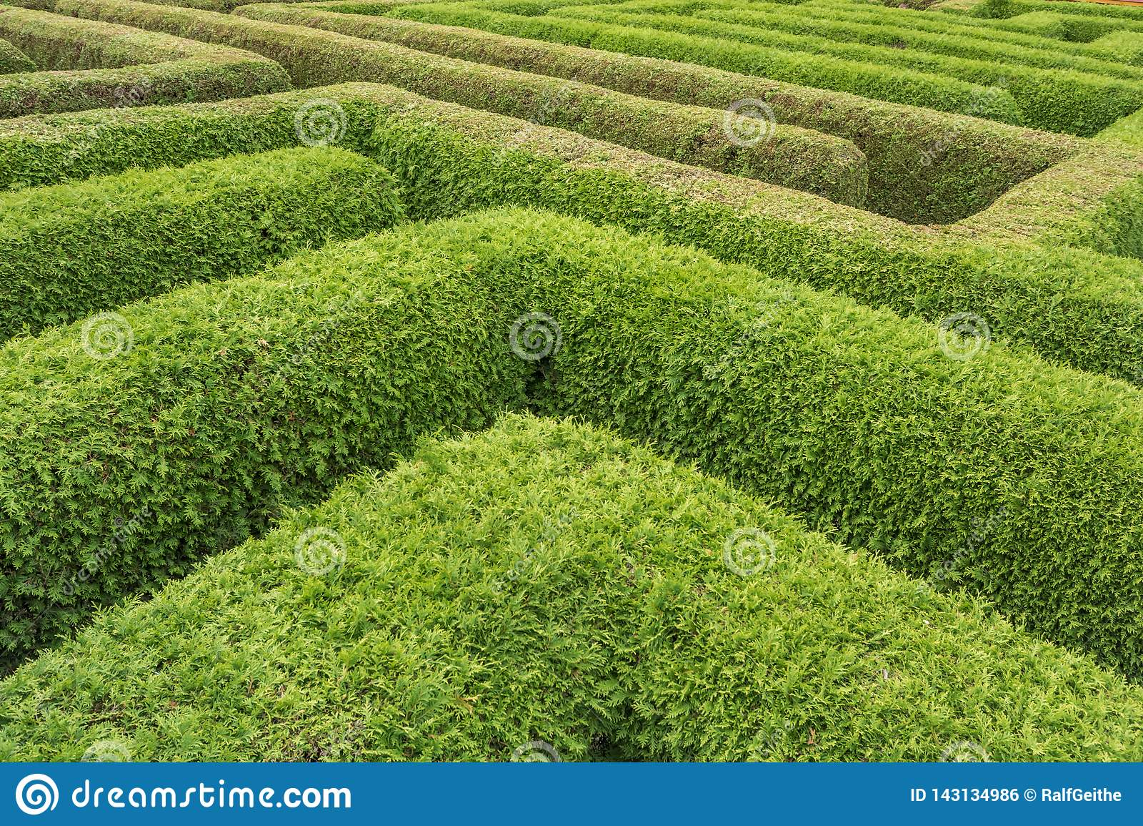 Cursos en un laberinto de setos verdes