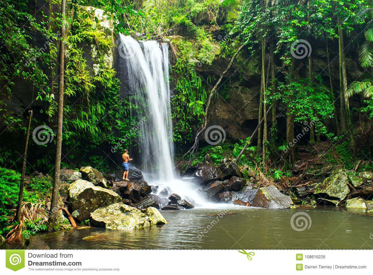 Download Curtis Falls In Mount Tamborine National Park On The Gold Coast Editorial Photo - Image of flowing, popular: 108616226