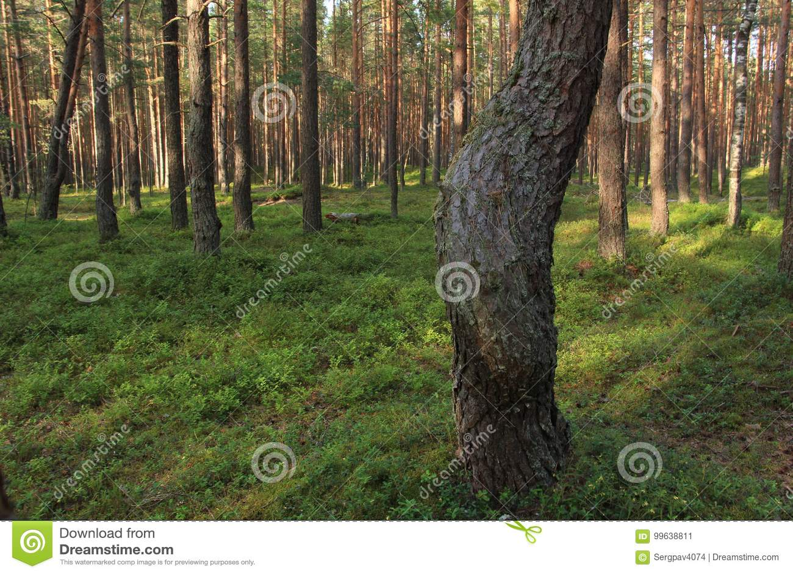 A curva de um tronco de árvore