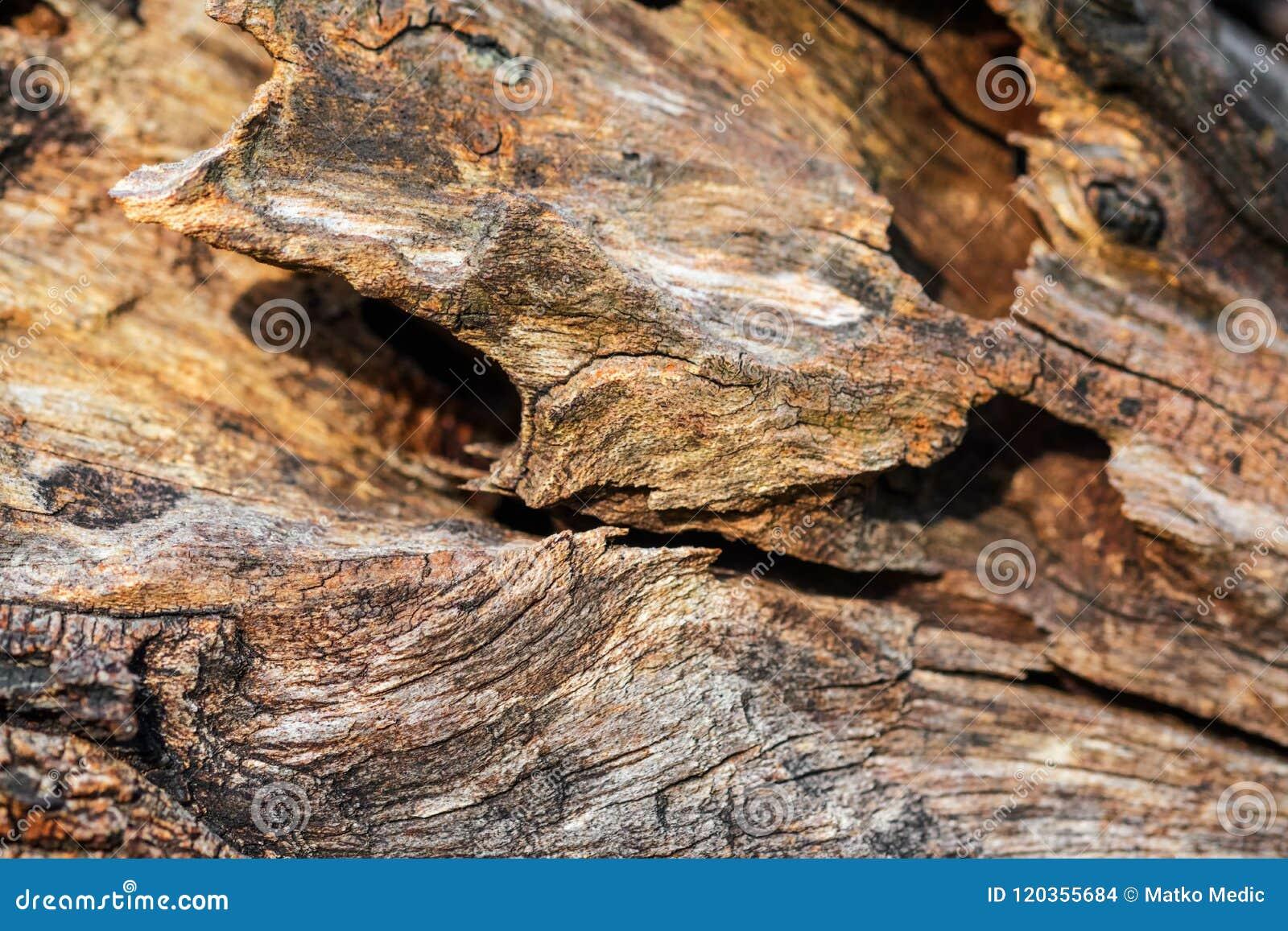 Curvas ásperas de la madera vieja