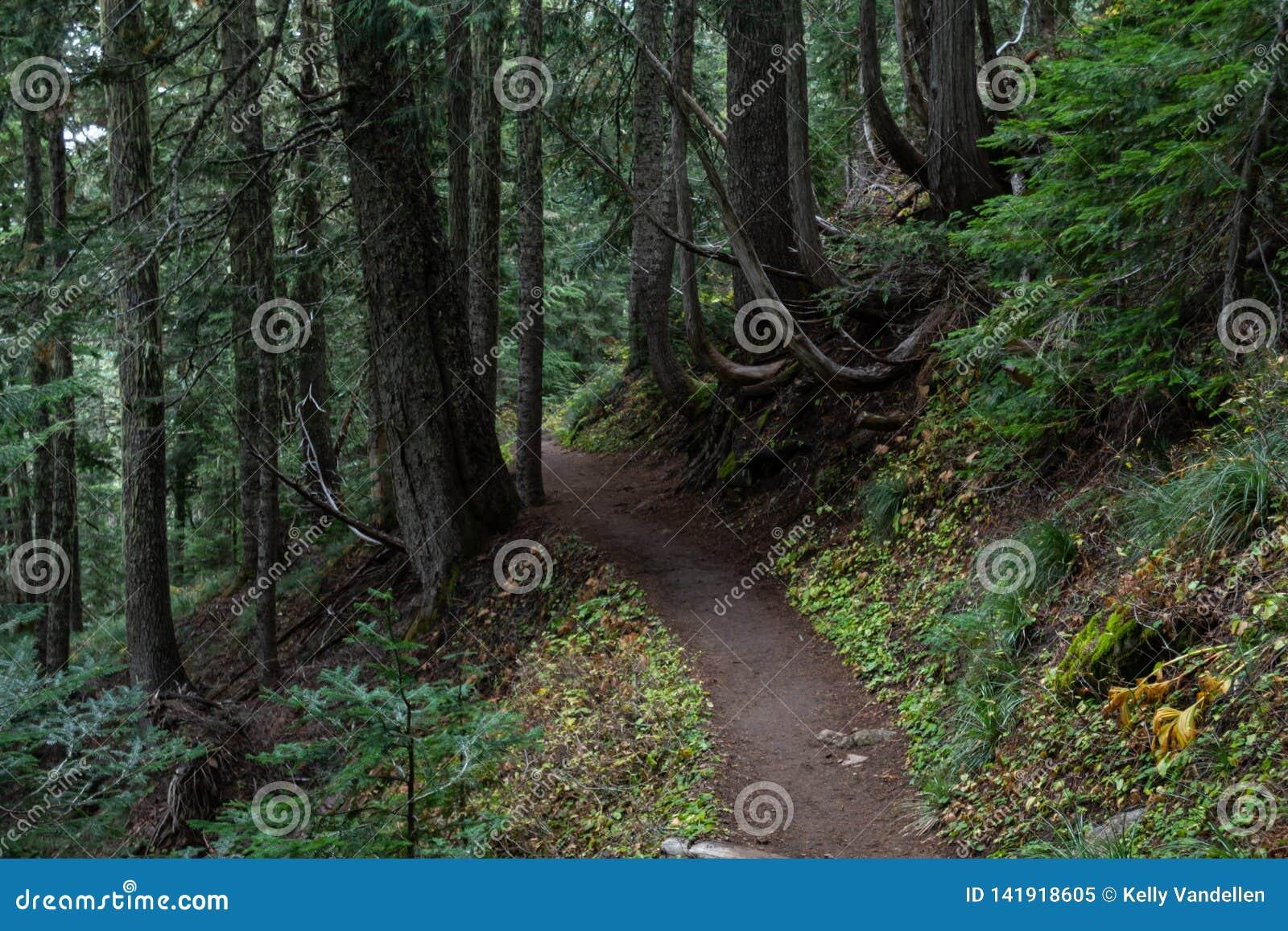 Curvaturas da fuga através da floresta noroeste pacífica