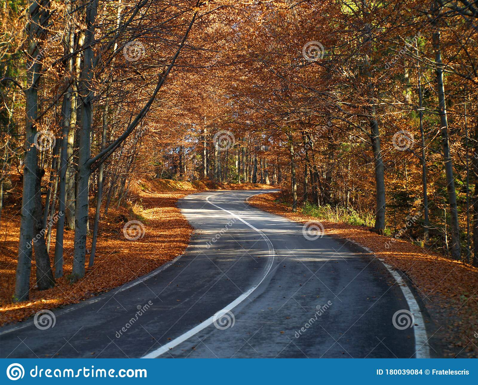Curvy Road Through The Forest In Autumn Many Colorful Leafs On The Ground Road To The Woods Stock Photo Image Of Blanket Curvy 180039084