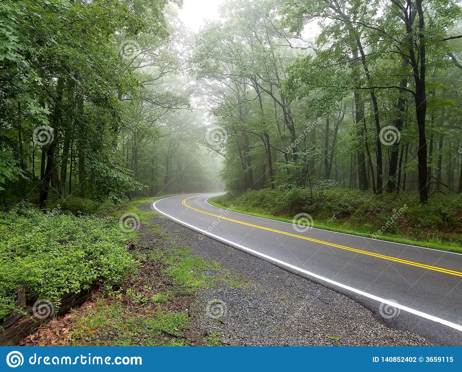 Curved smooth road with bright yellow and white markings on grey asphalt in green summer forest