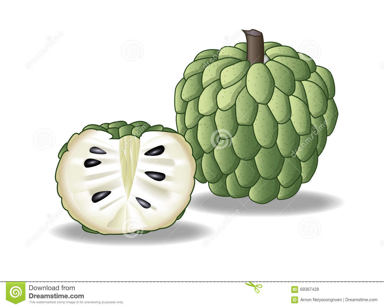 Custard Apple Cartoon Images